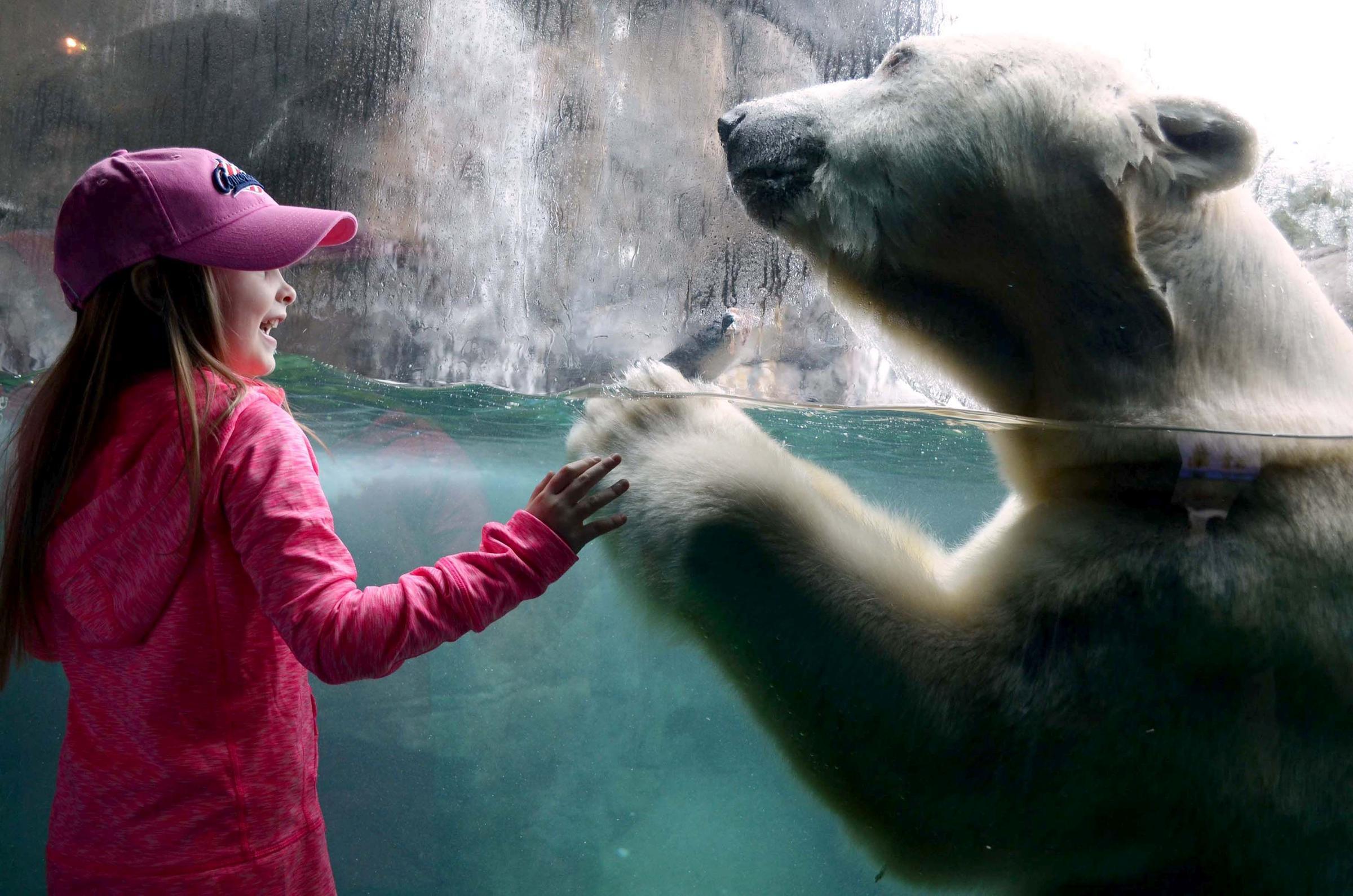 Aurora, Seneca Park Zoo's beloved polar bear, dies at 28 | WXXI News