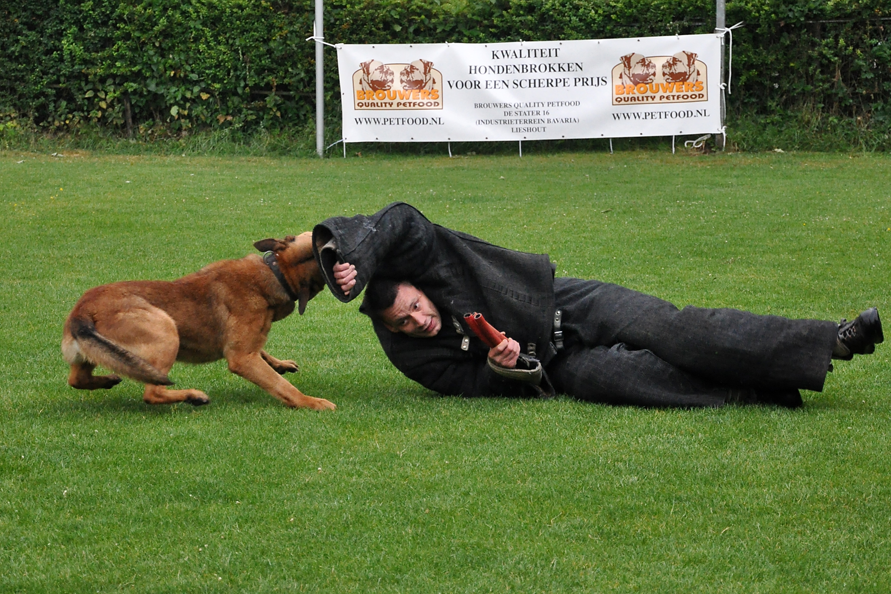 Police dog, Bite, Biting, Dog, Dogs, HQ Photo