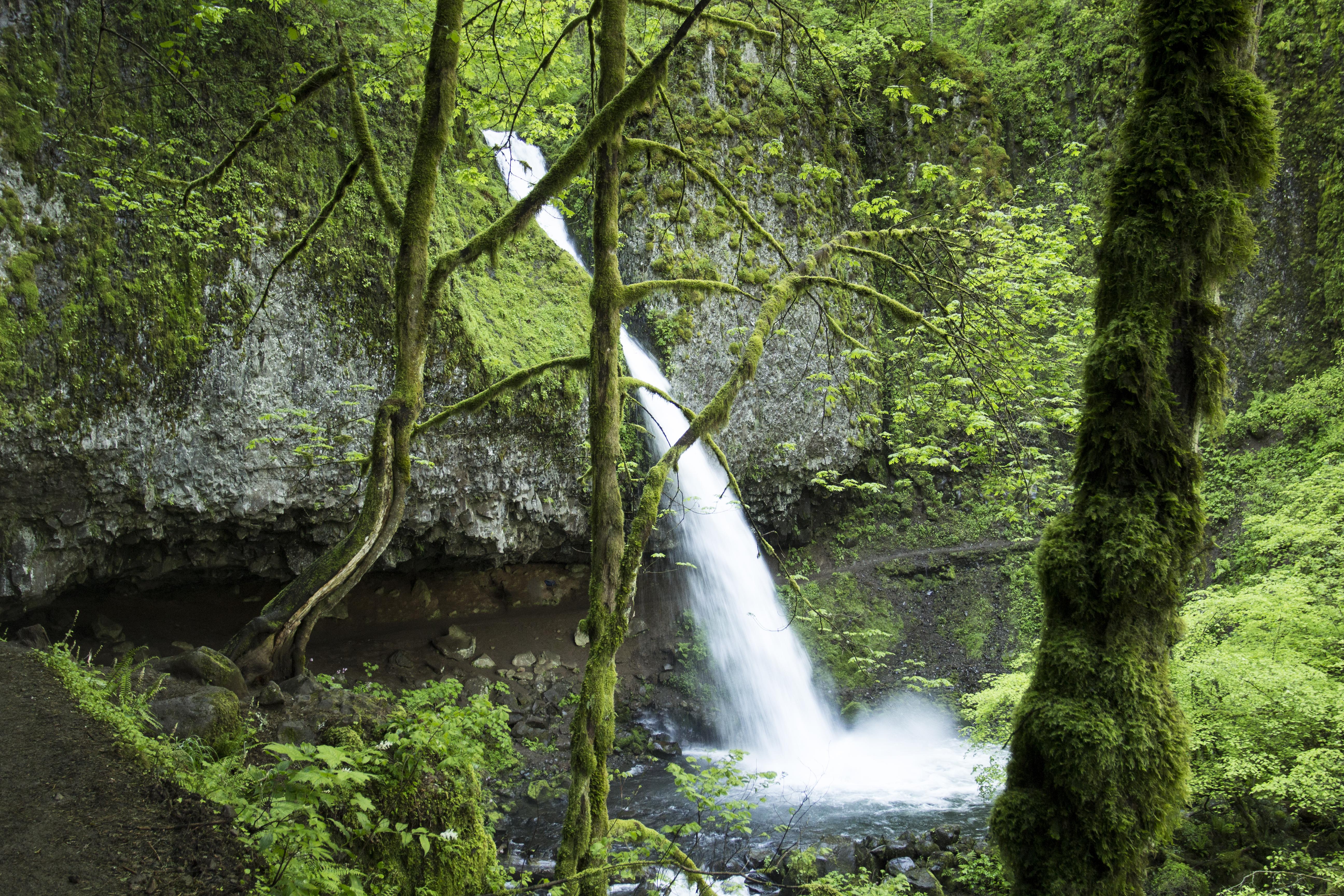 Ponytail falls, oregon photo