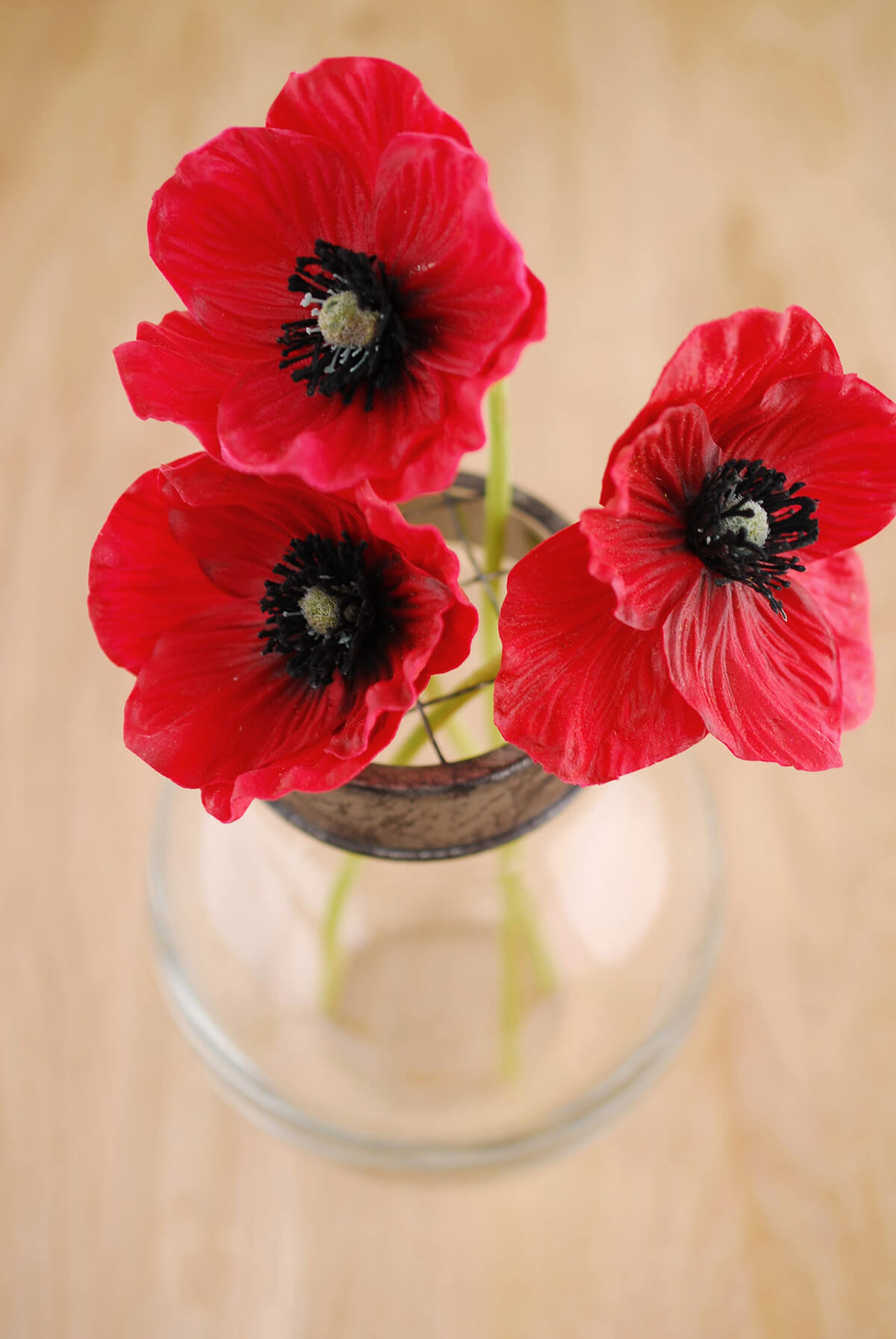 Free Photo Red Poppy Flower Outdoors Nature Park Free