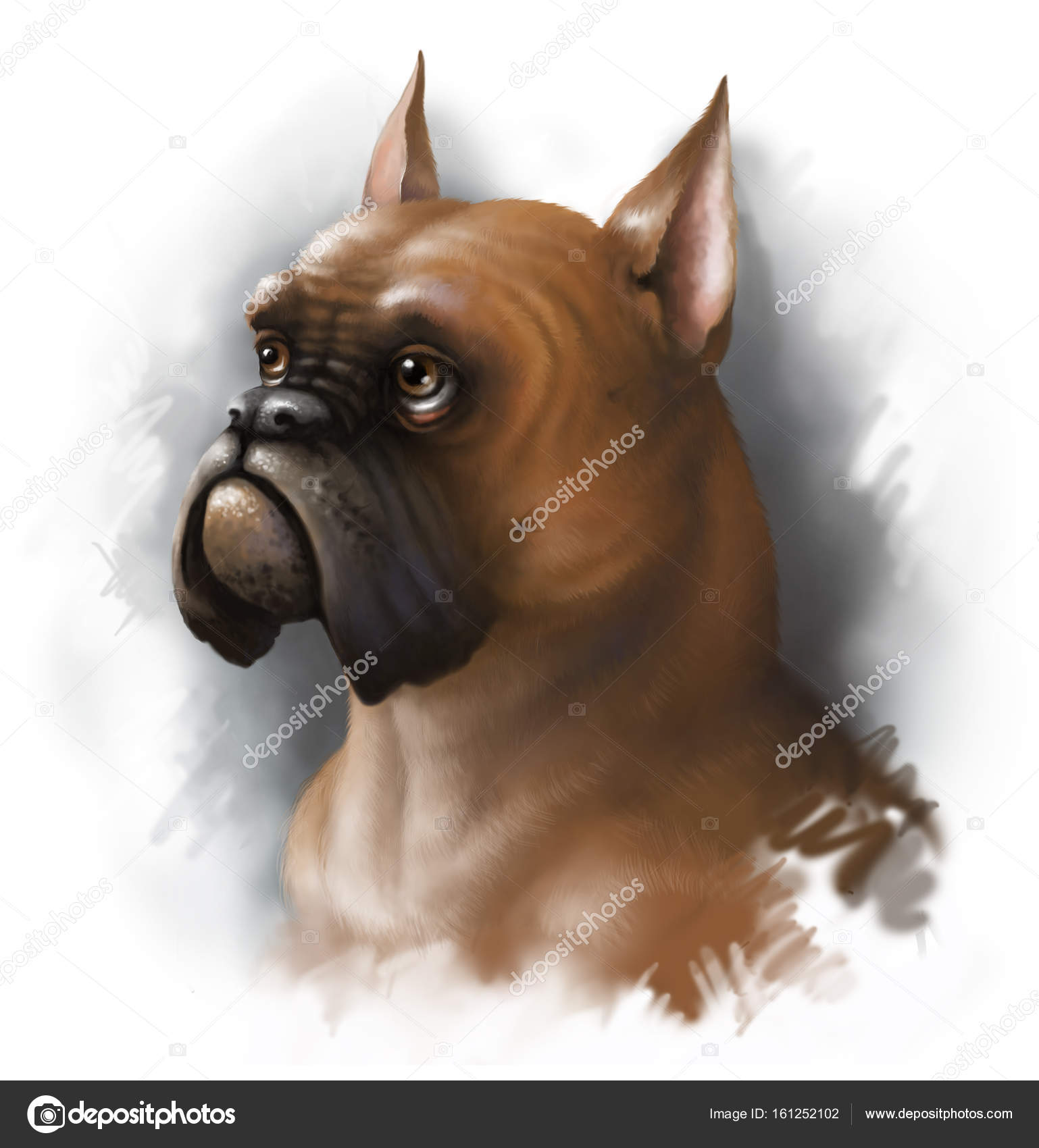 Digital portrait of a red dog breed boxer. Digital painting. — Stock ...