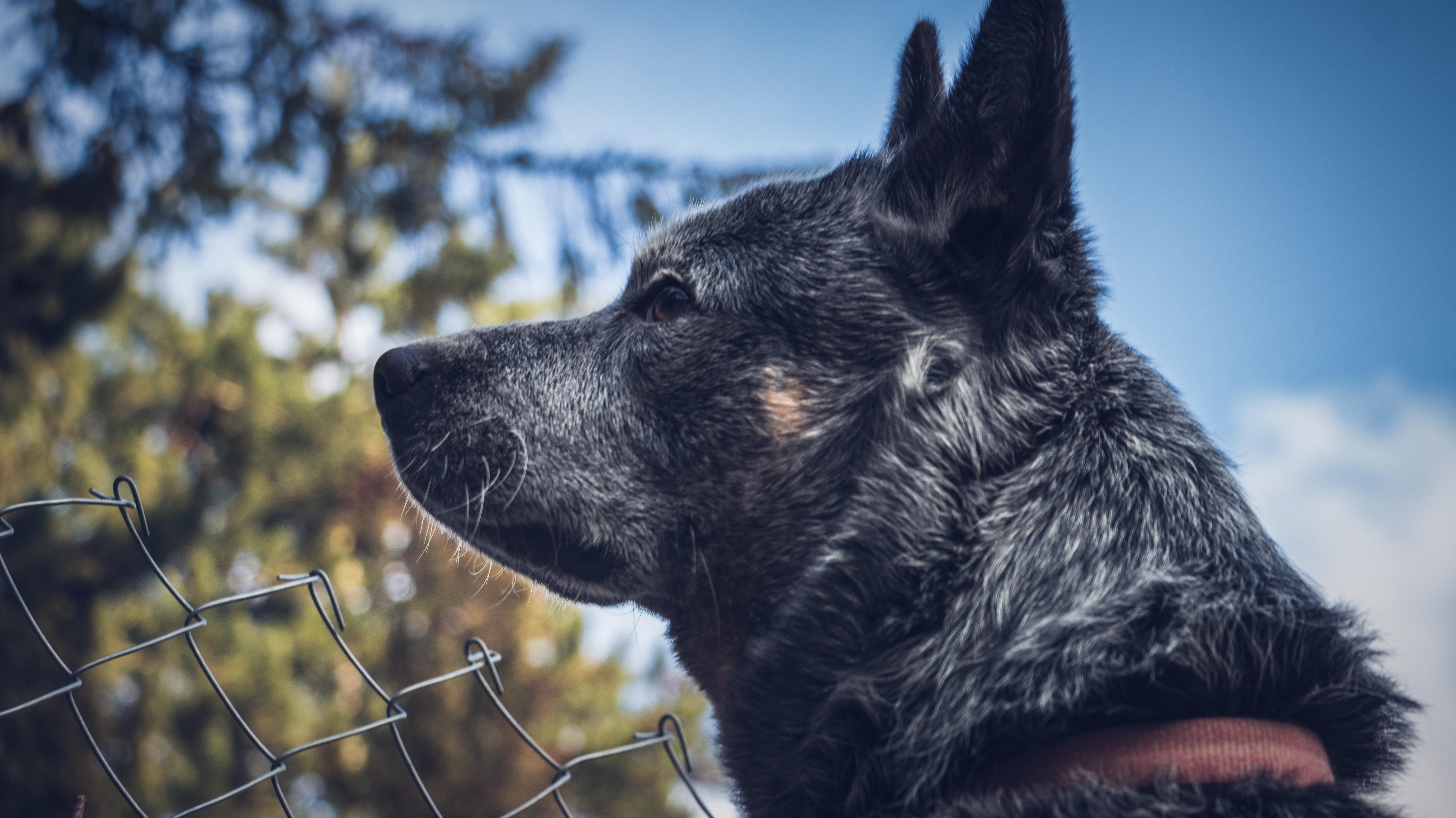Portrait of a dog photo
