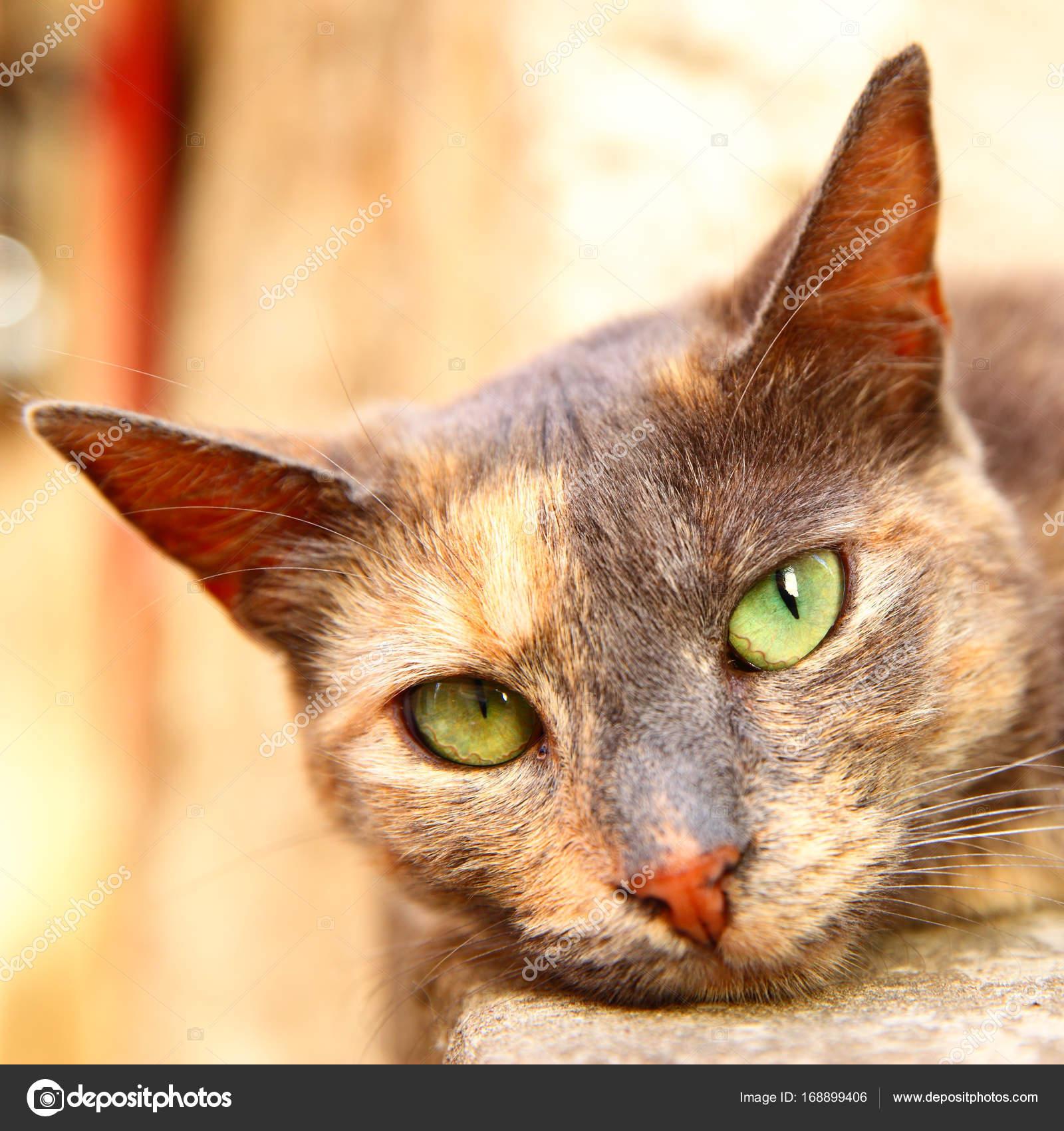 Portrait of cat — Stock Photo © Zoooom #168899406
