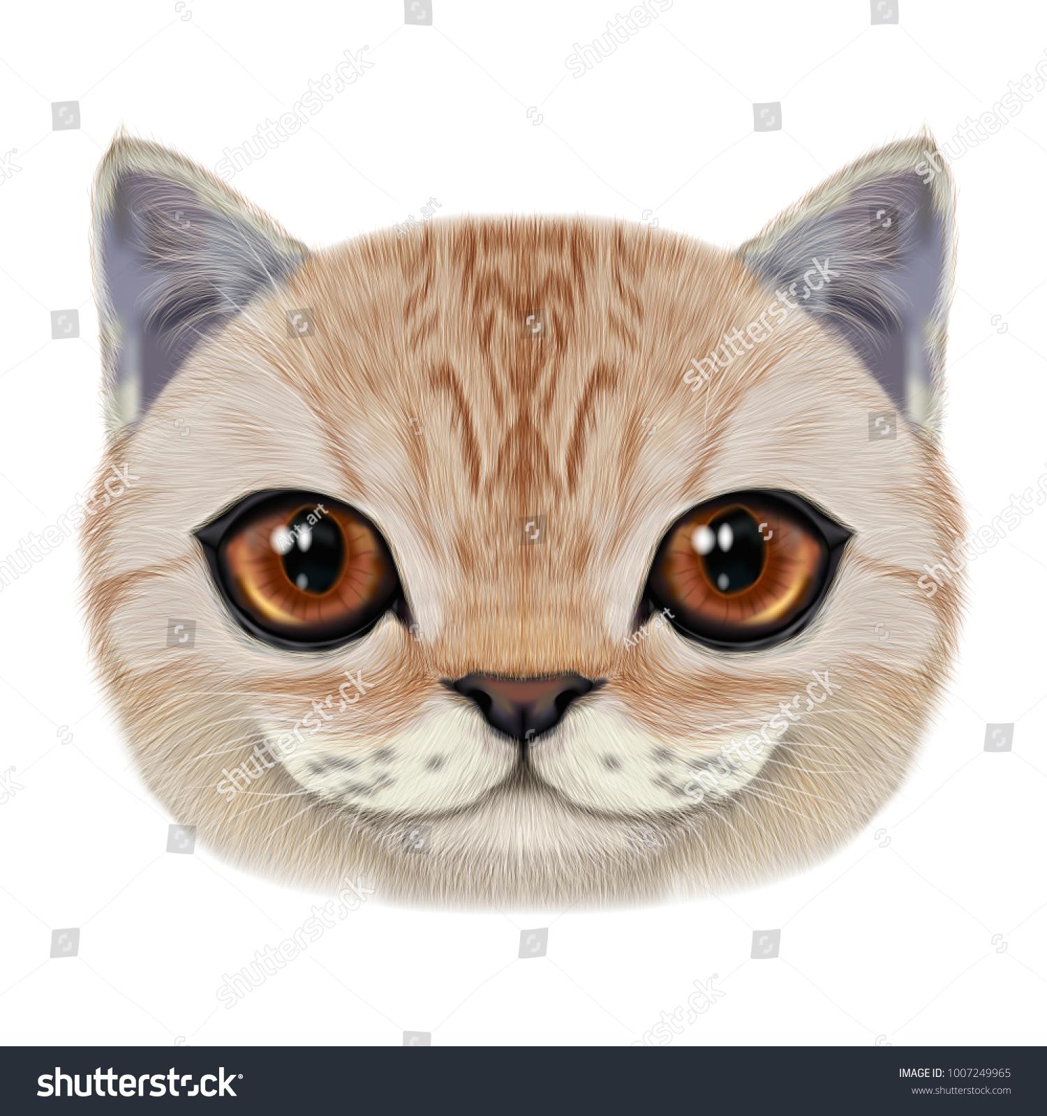 Illustration Portrait Domestic Cat Cute Realistic Stock Illustration ...