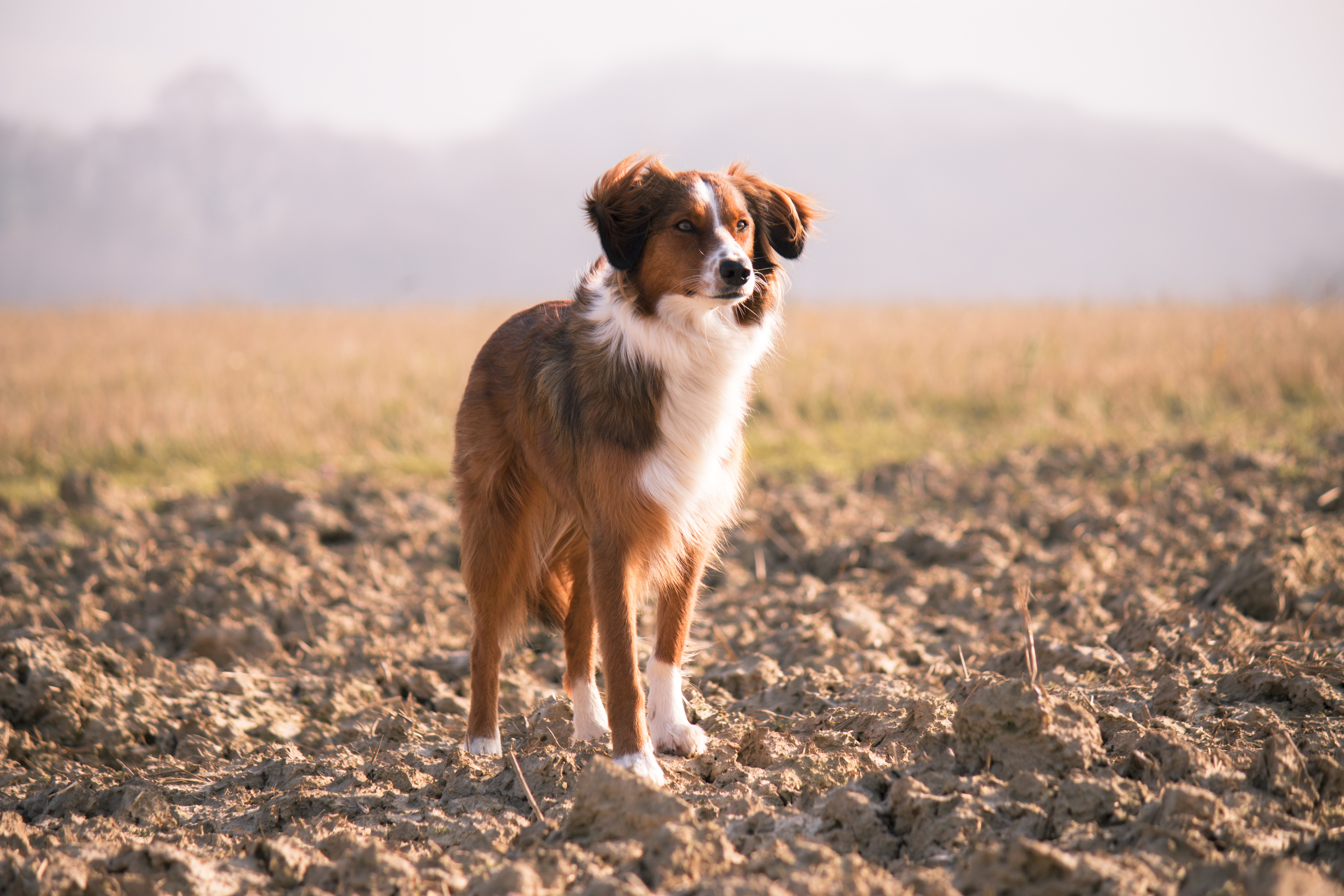 Scruffy puppy dog photo