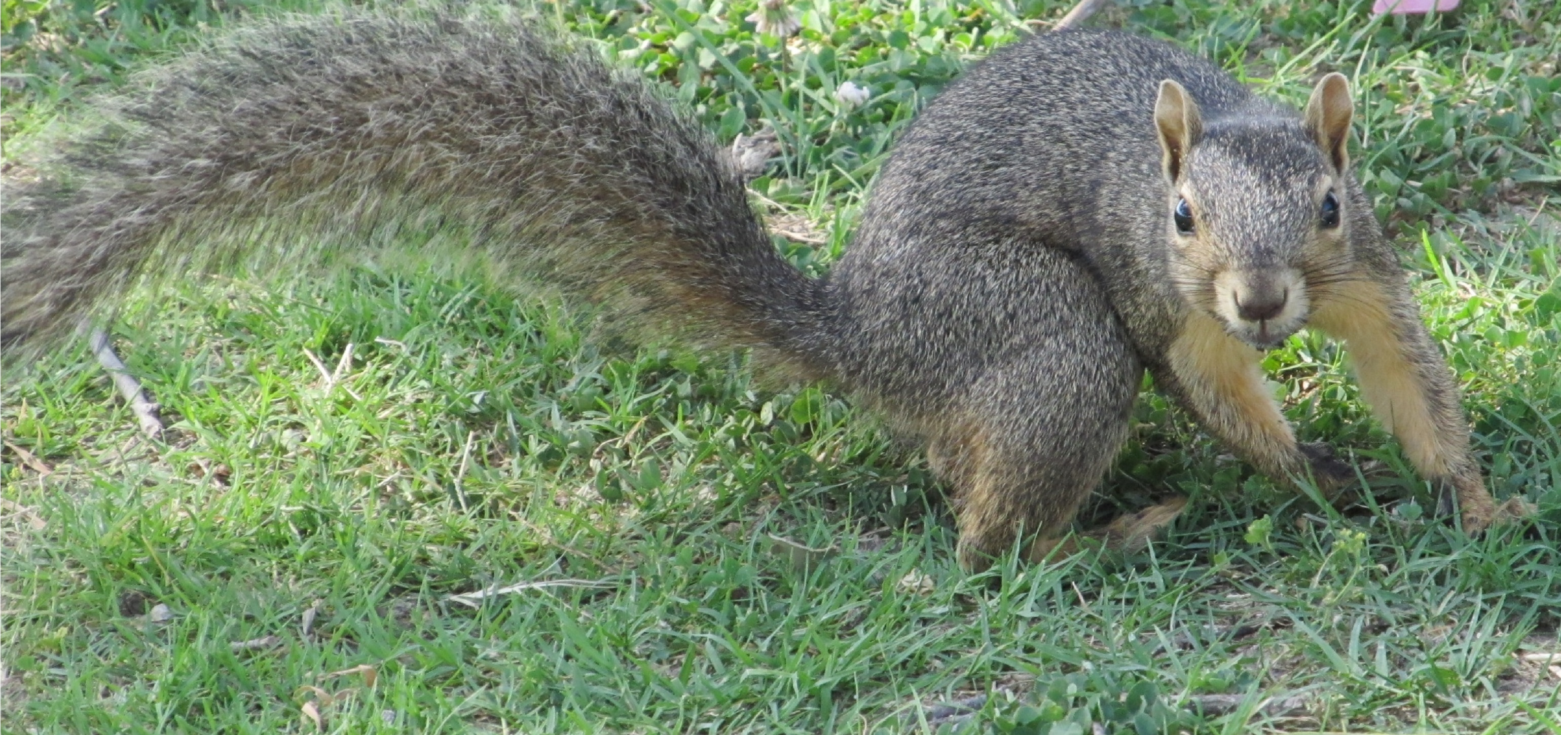 Pose of a squirrel photo
