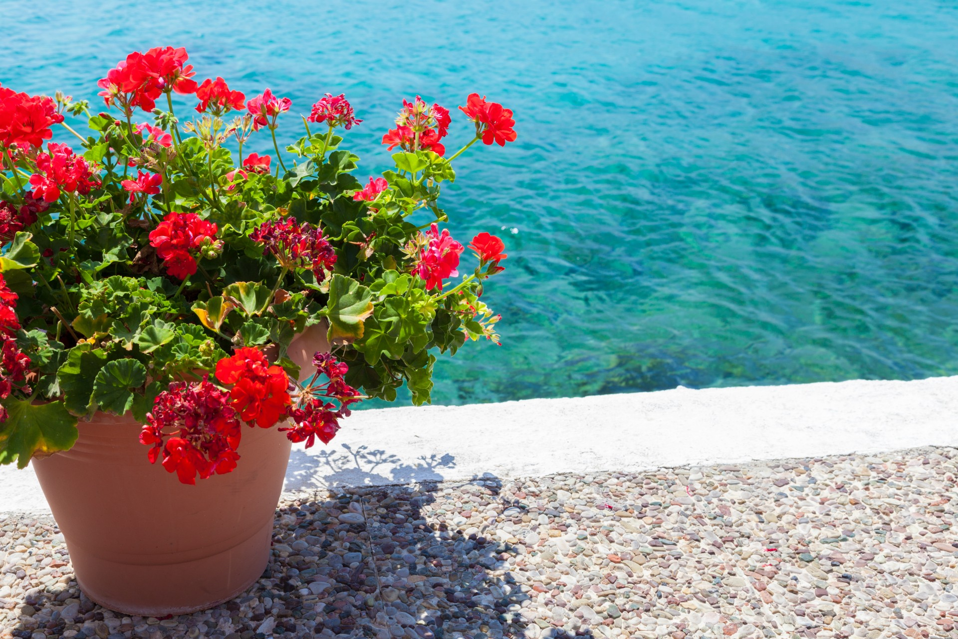 Pot Of Flowers And Sea Free Stock Photo - Public Domain Pictures