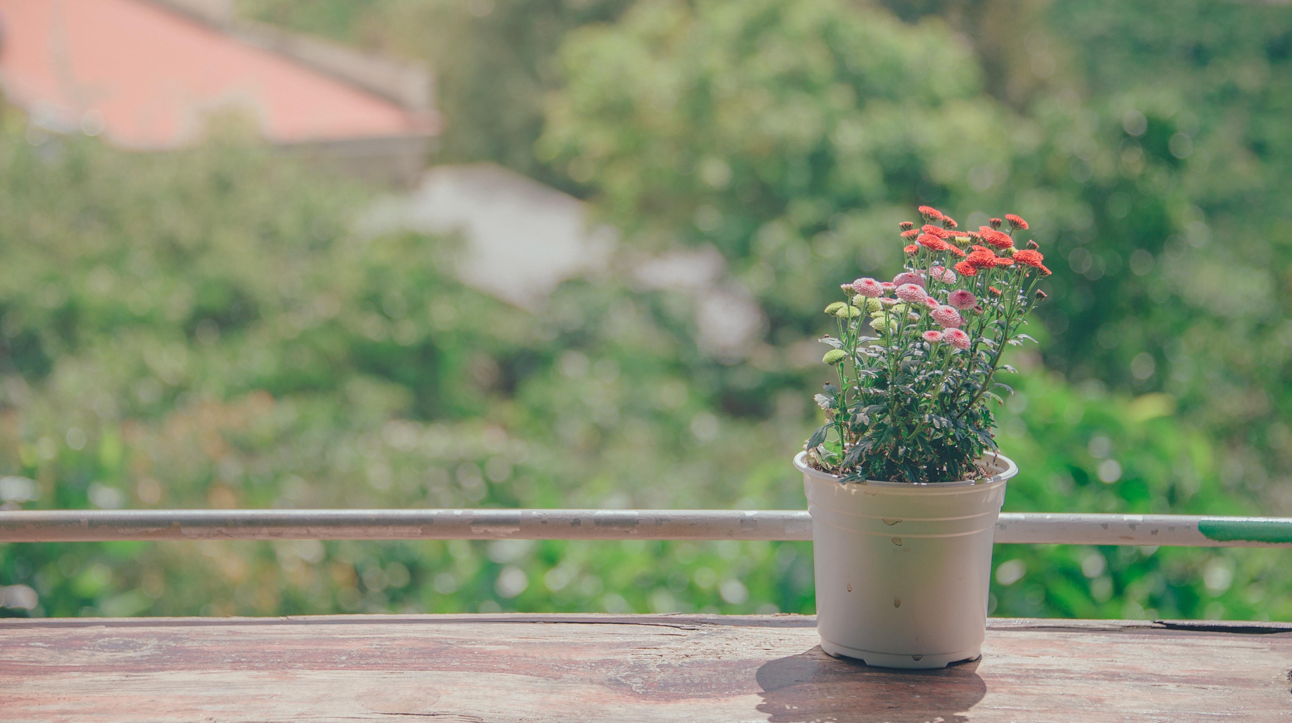 Pot of flowers near balcony photo