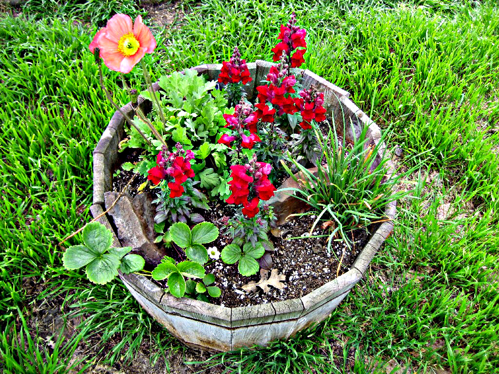 Pot of Flowers, Barrell, Bspo06, Flowers, Green, HQ Photo