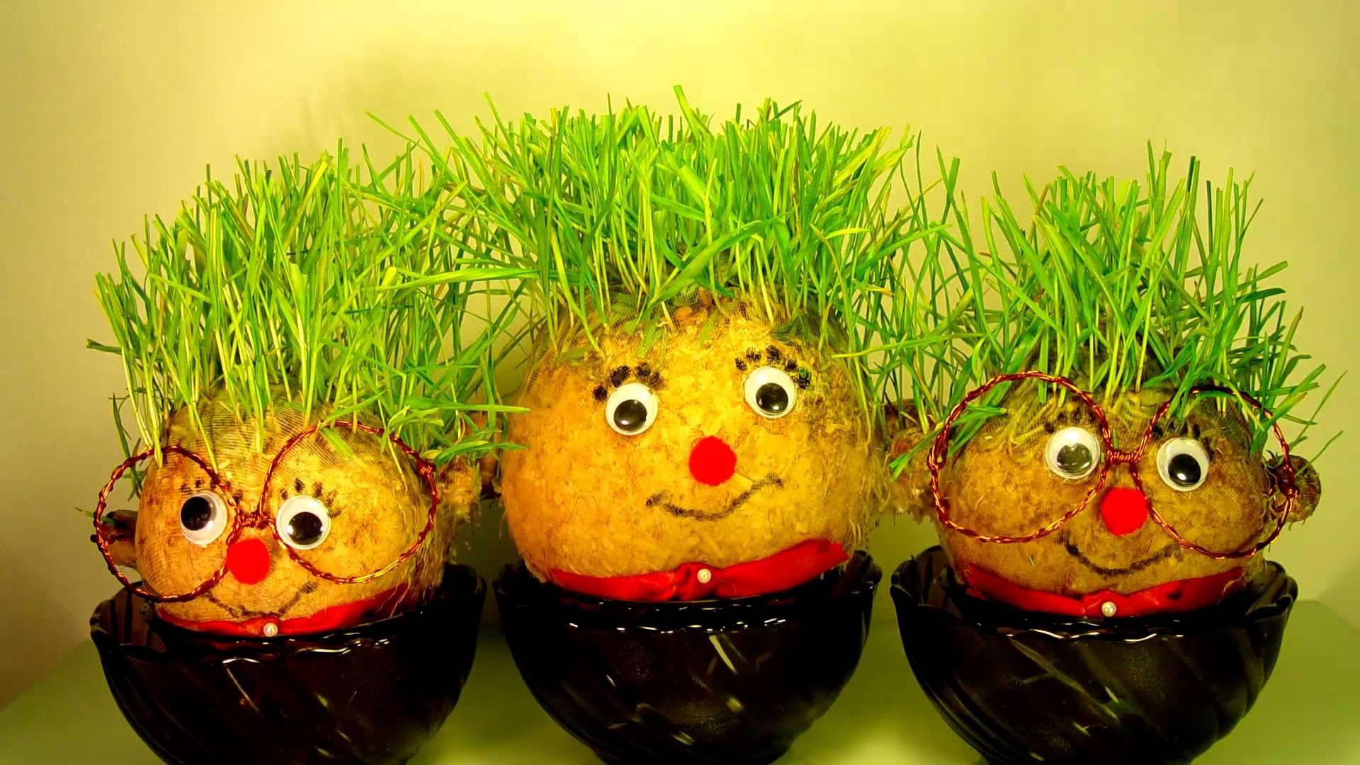 Potato grass photo