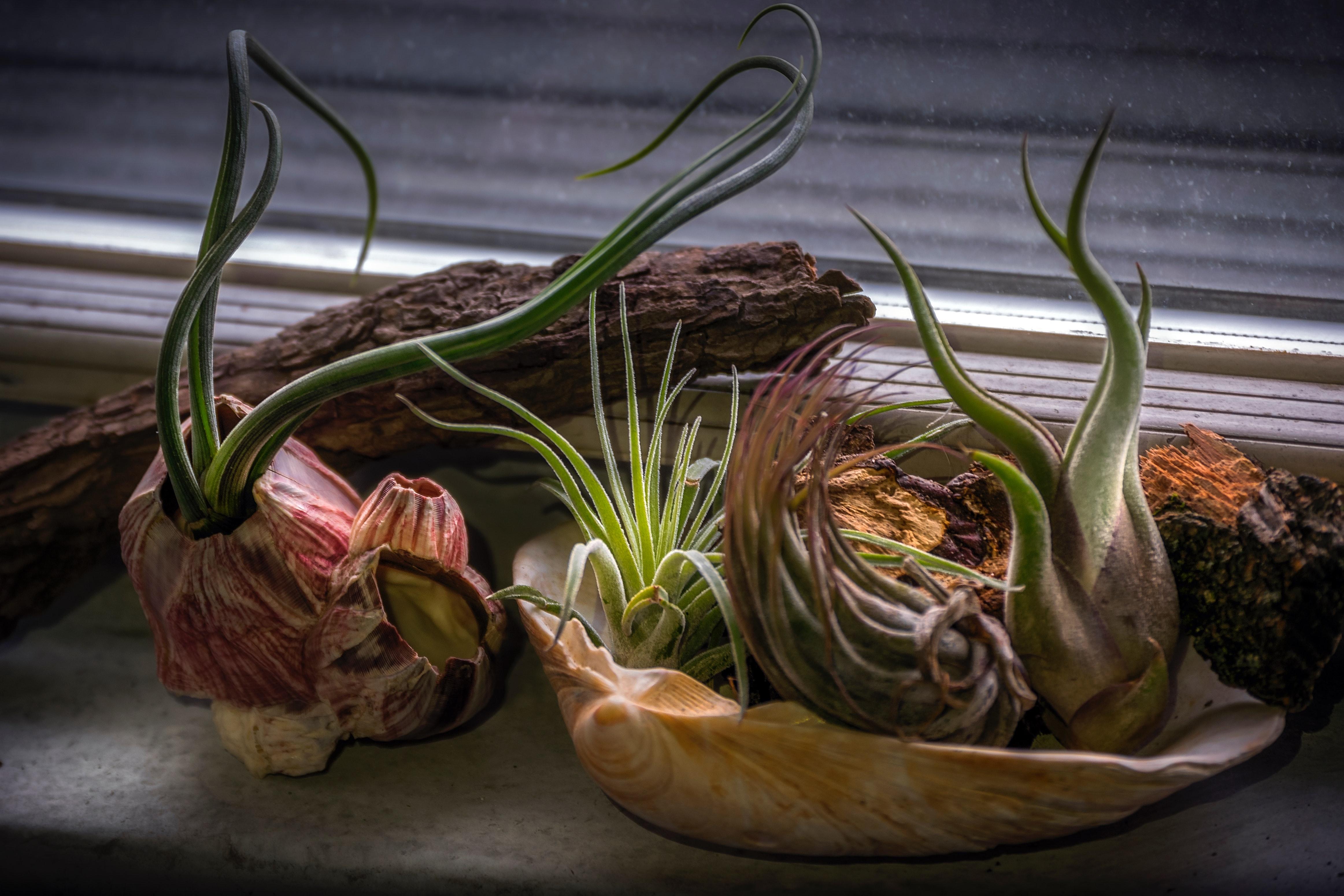 Potted Succulent Plants, Close-up, Colors, Decoration, Driftwood, HQ Photo