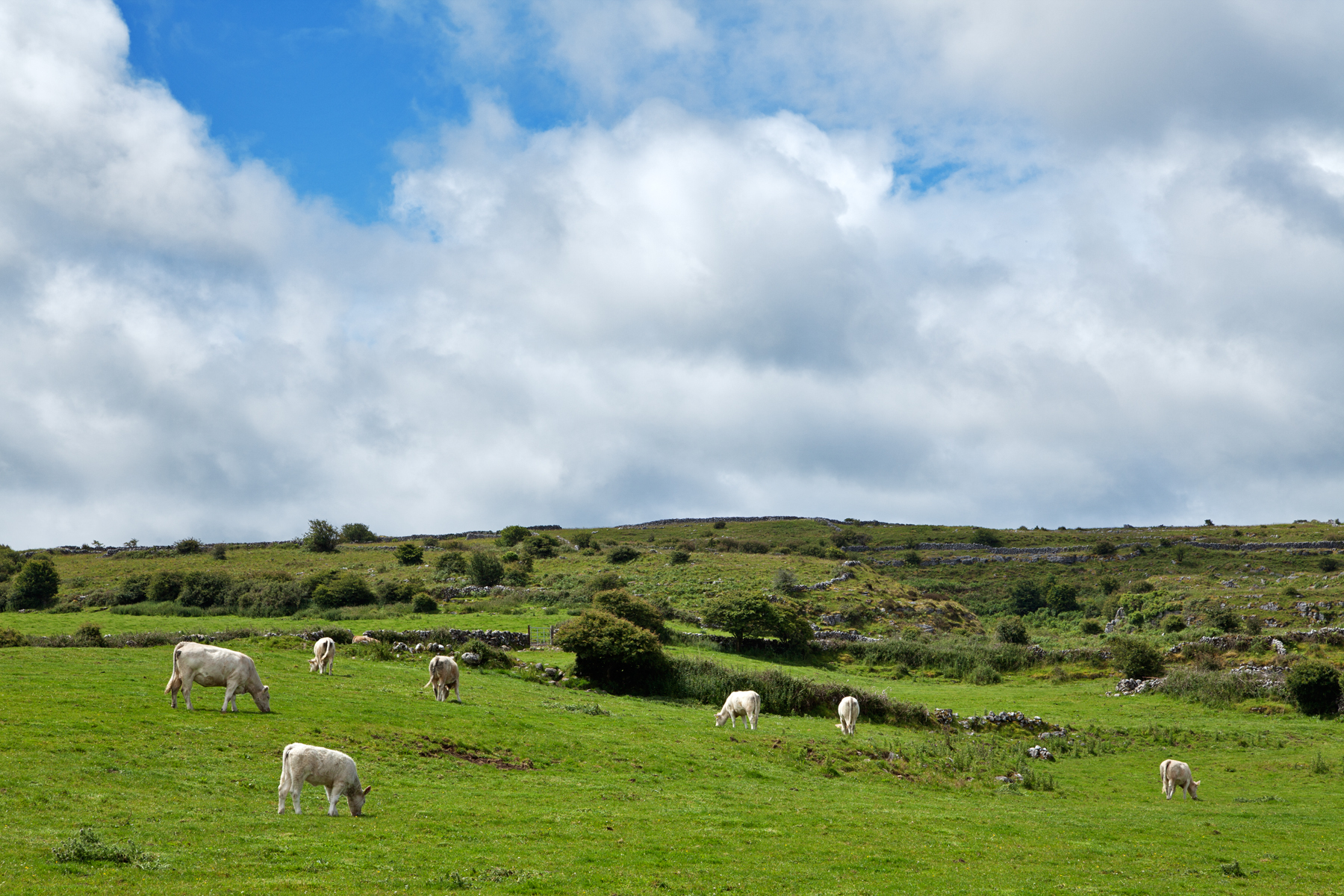 Poulnabrone Pasture, Agricultural, Peaceful, Resource, Republic, HQ Photo