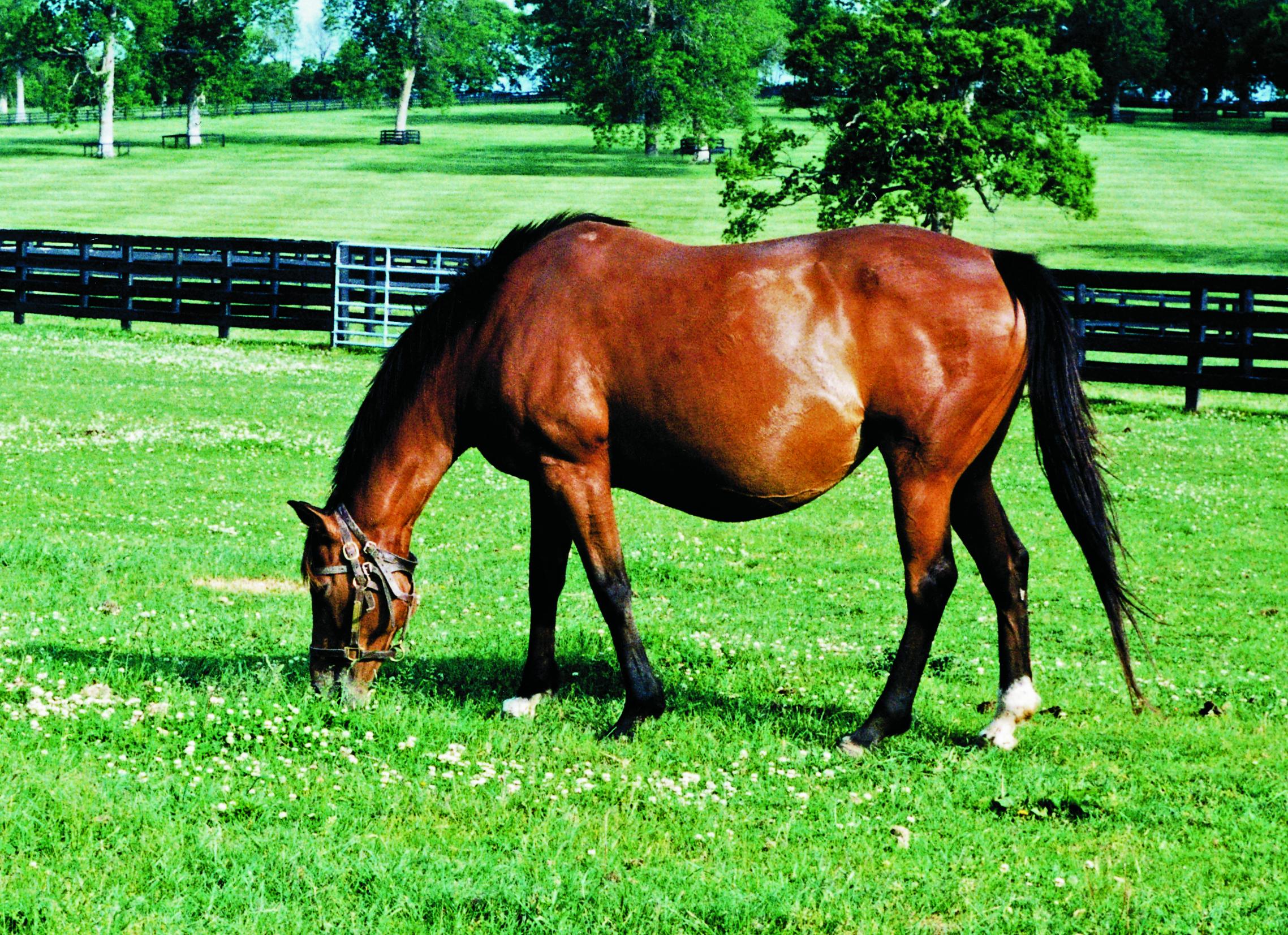 Pregnant horse photo