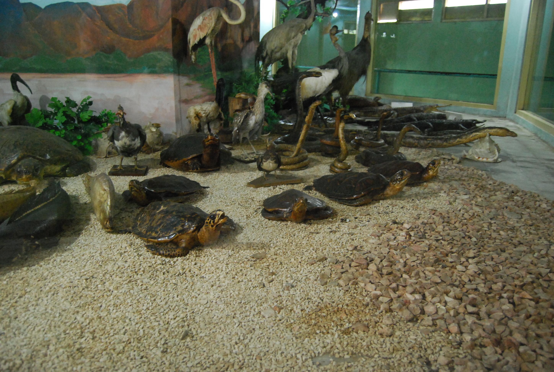 Preserved animals at surabaya zoo photo