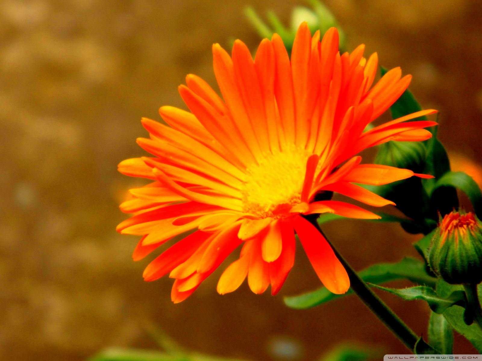 Free Photo Pretty Orange Flower Macro Green Nature Free
