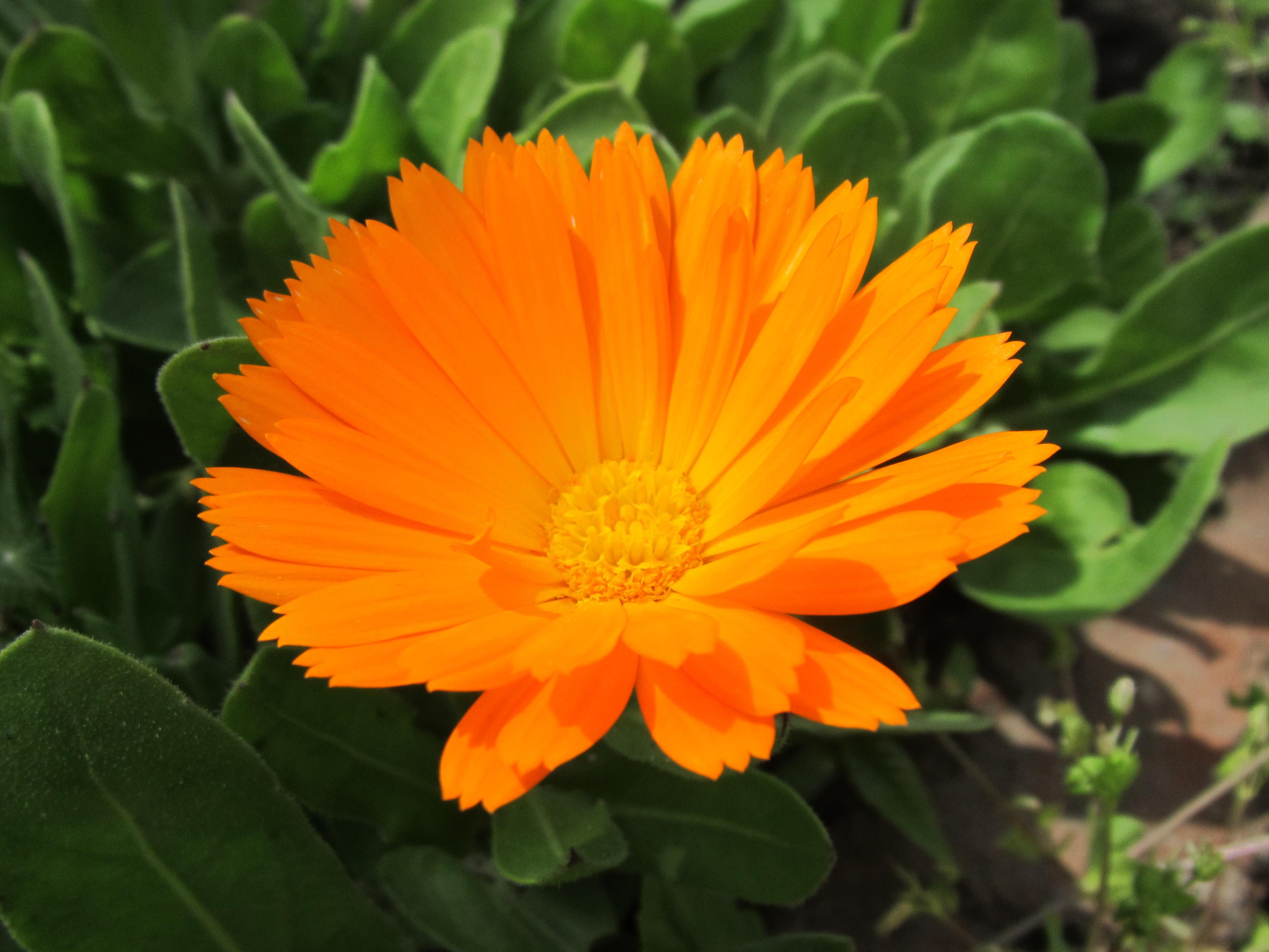 Free Photo Pretty Orange Flower Macro Green Nature Free
