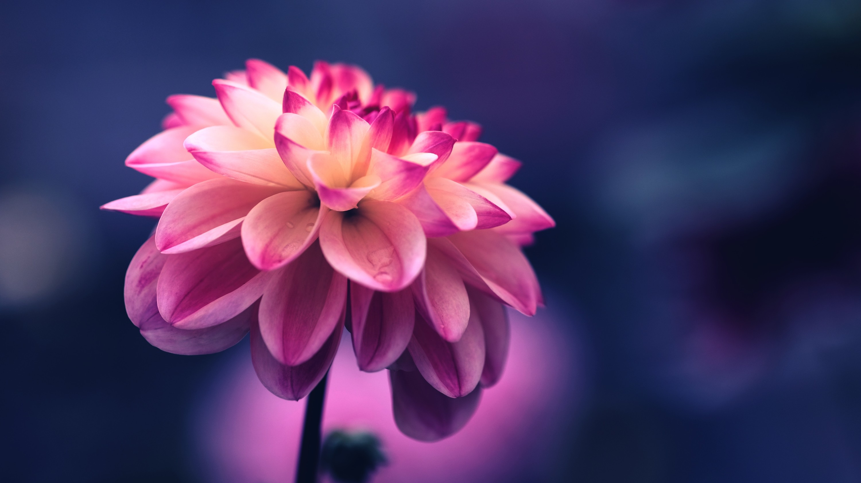 Free Photo Pretty Pink Flower Plant Pretty Summer Free