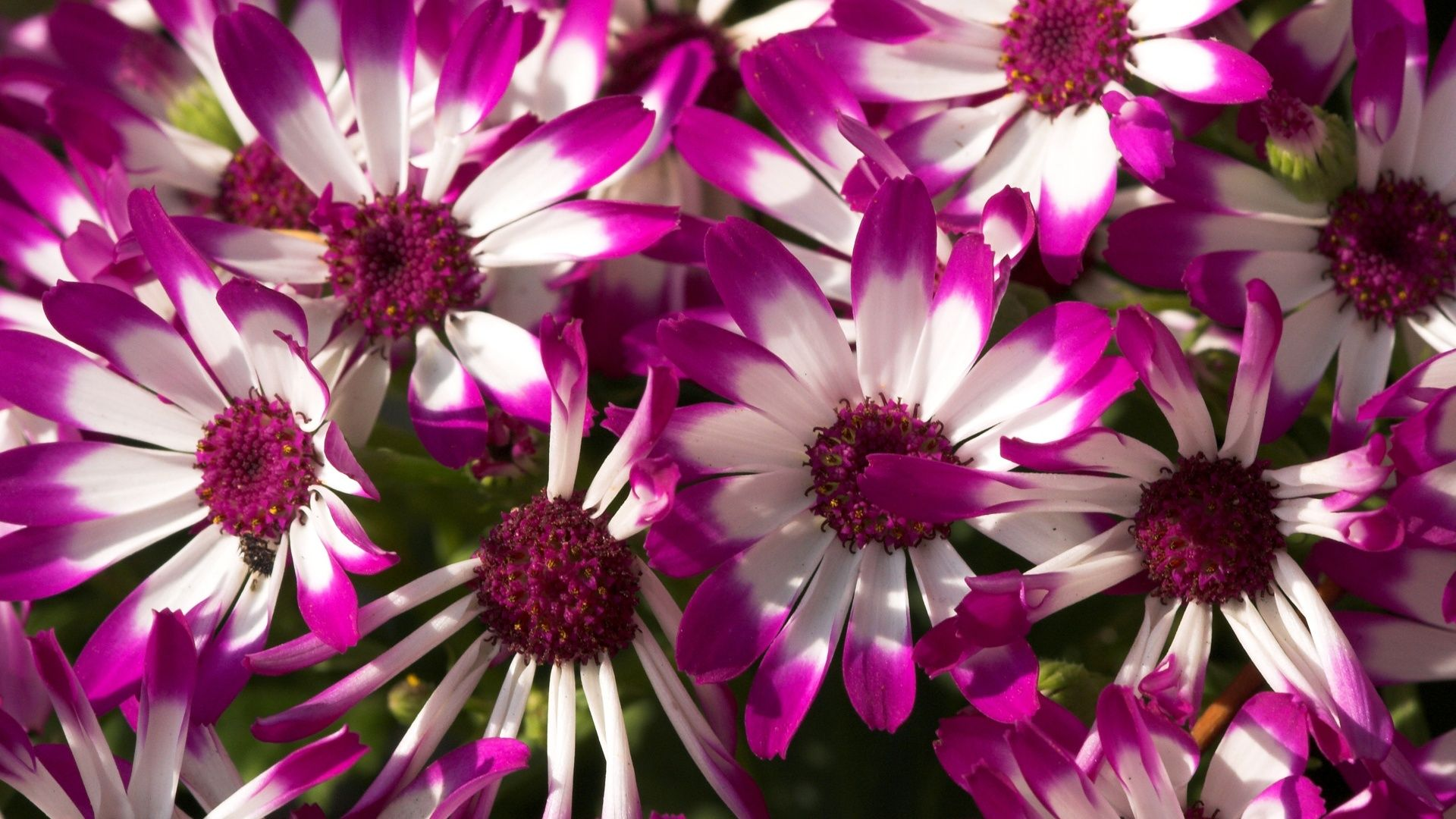 Free photo pretty purple flower garden macro outdoors free pretty purple flower mightylinksfo