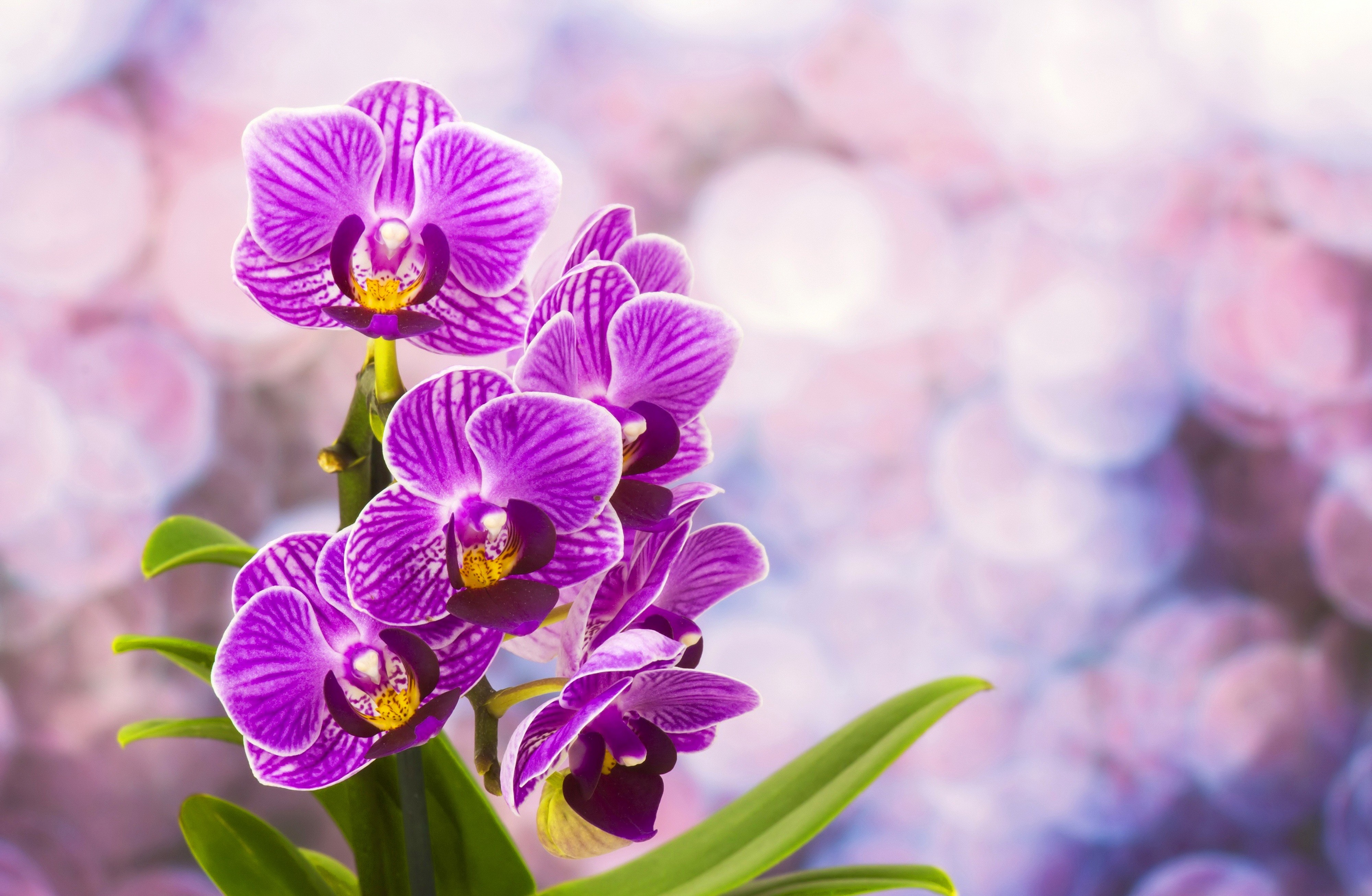 Free photo pretty purple flower garden macro outdoors free pretty purple flower mightylinksfo