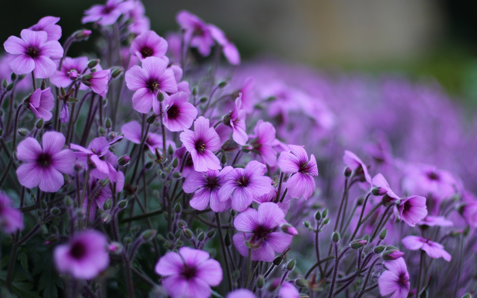 Free photo pretty purple flower plant park pretty non pretty purple flower mightylinksfo