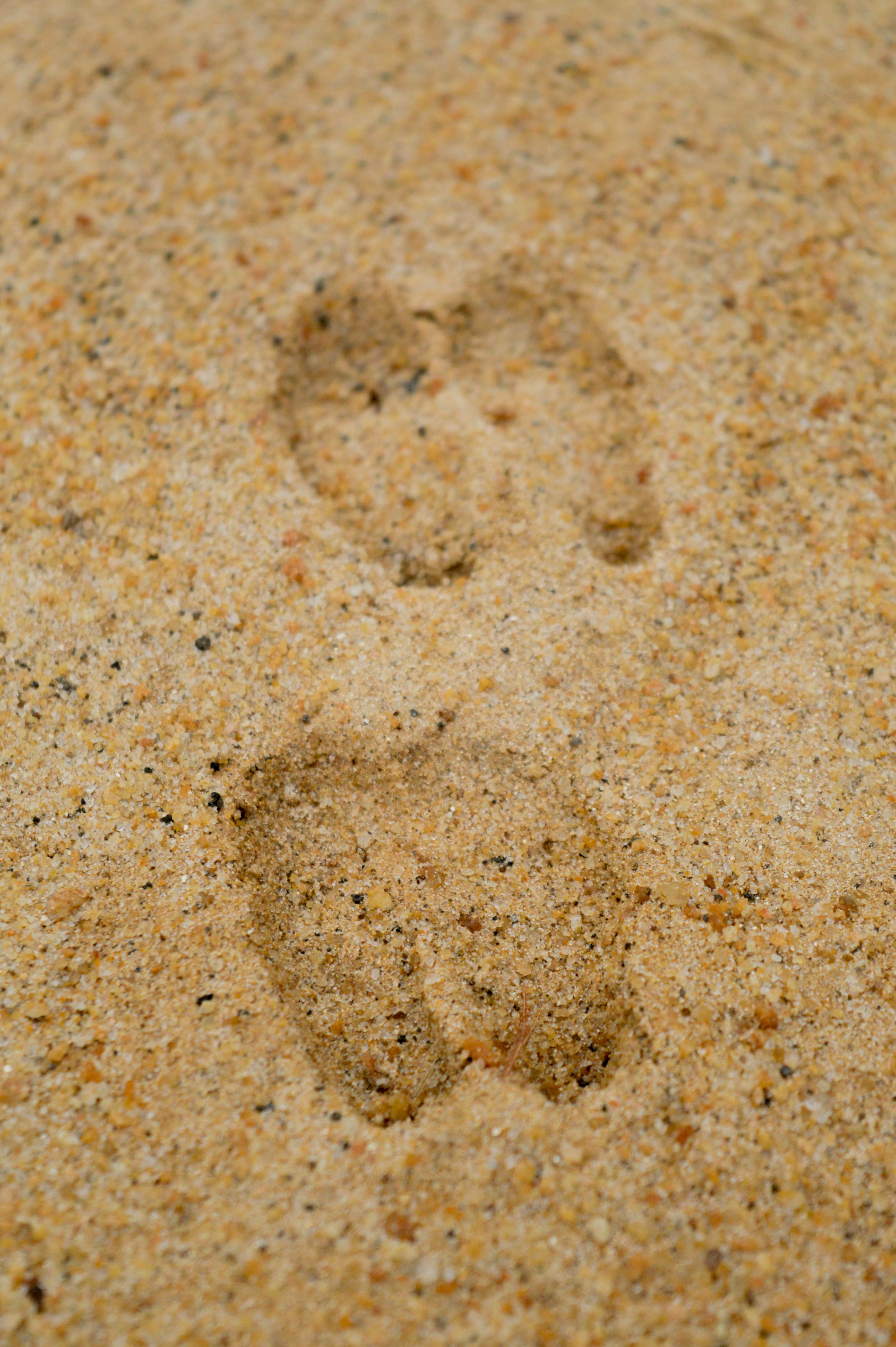 Prints, Step, Sand, Print, Foot, HQ Photo
