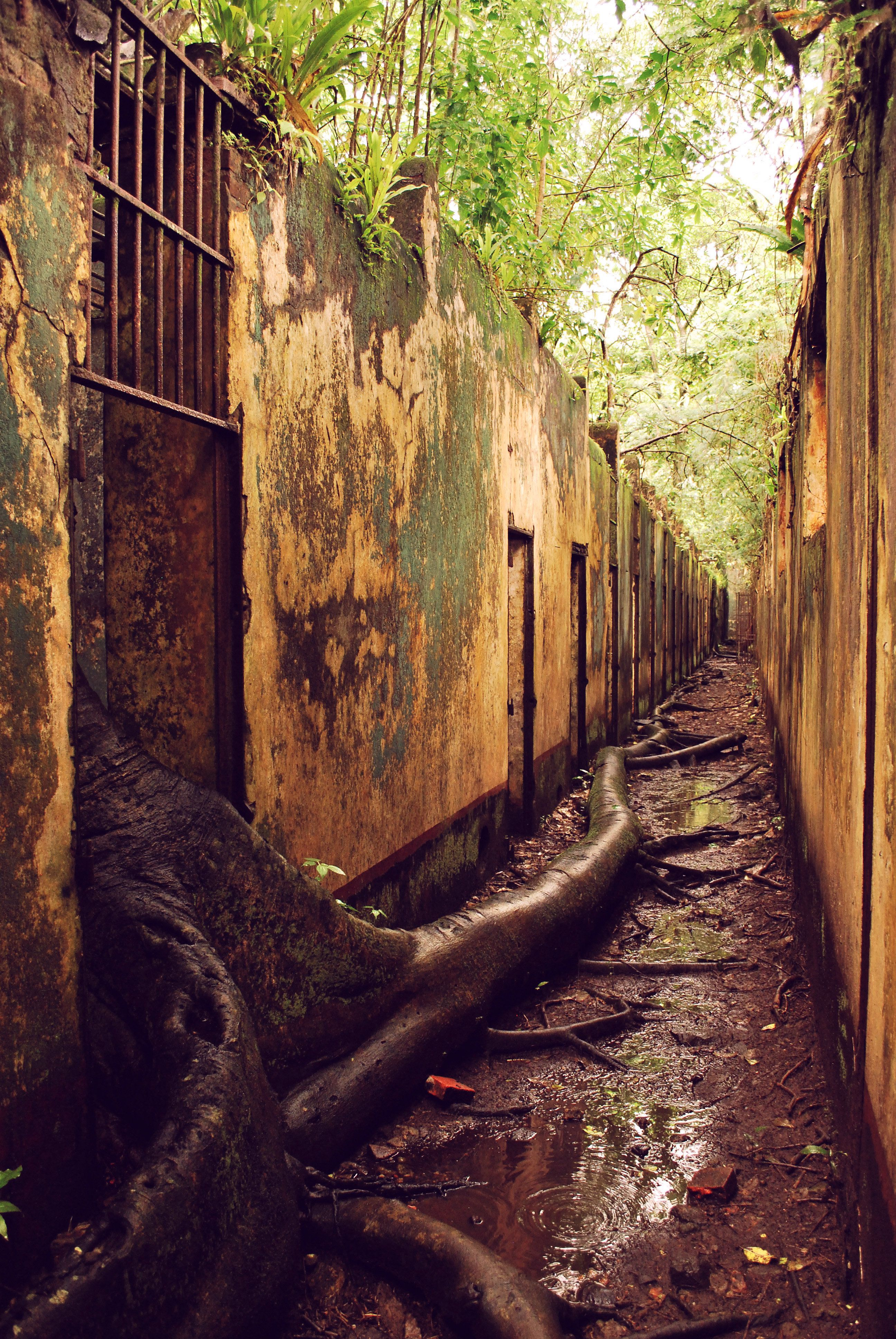 Devil's Island Prison. Devil's Island in French Guiana was the real ...