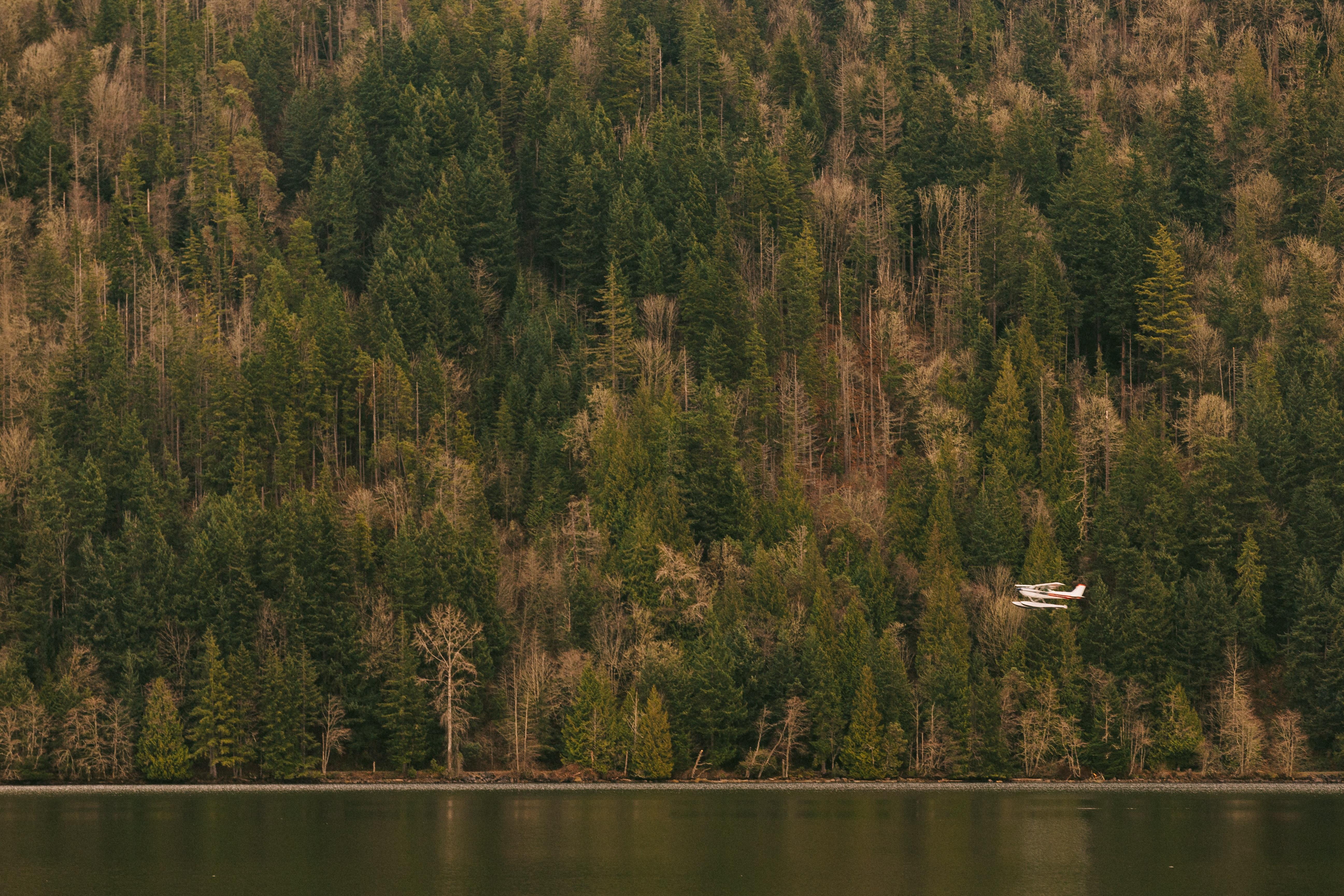 Private, Forest, Jet, Jungle, Lake, HQ Photo