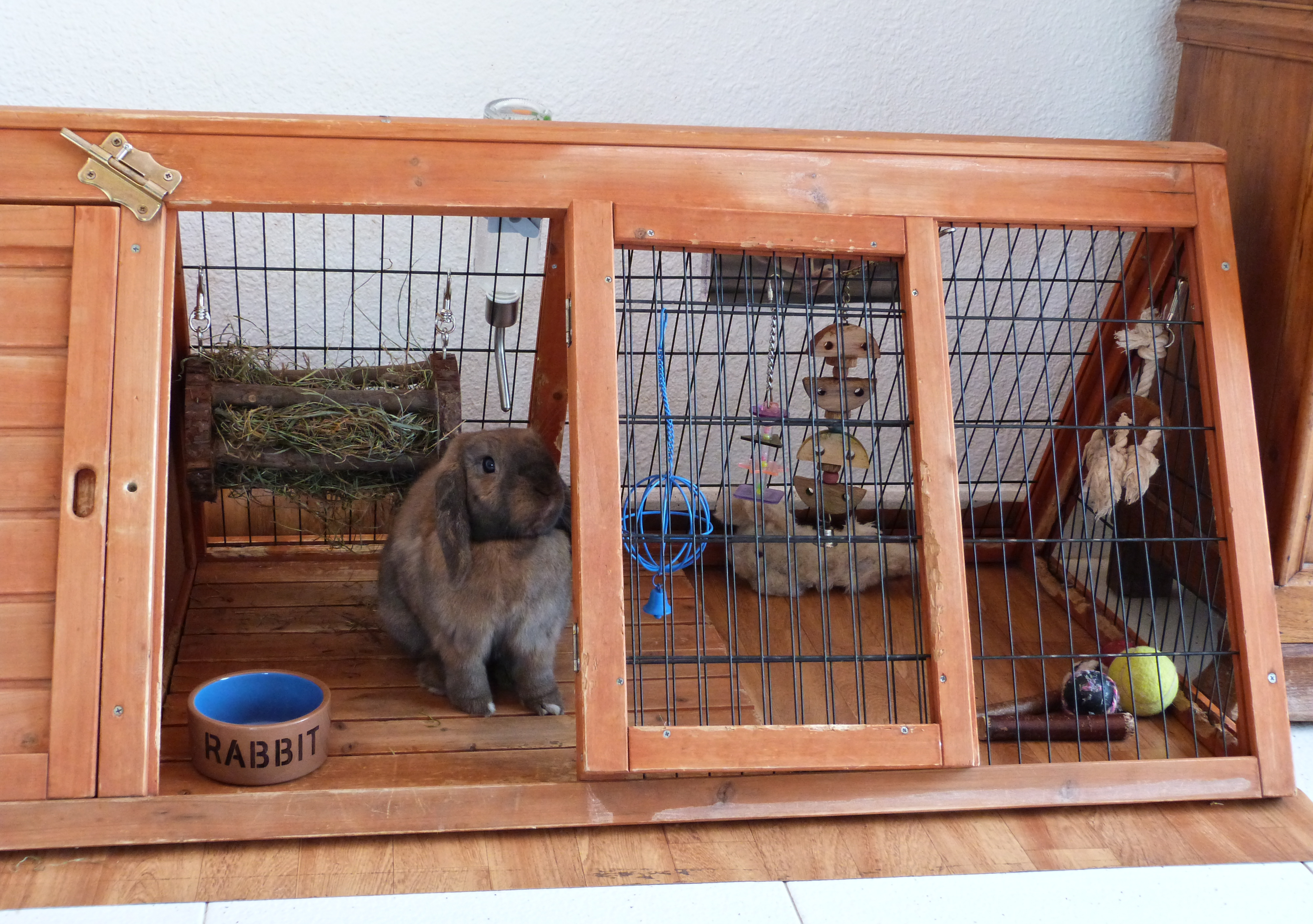 Protecting his home, Accessories, Black, Brown, Bunny, HQ Photo