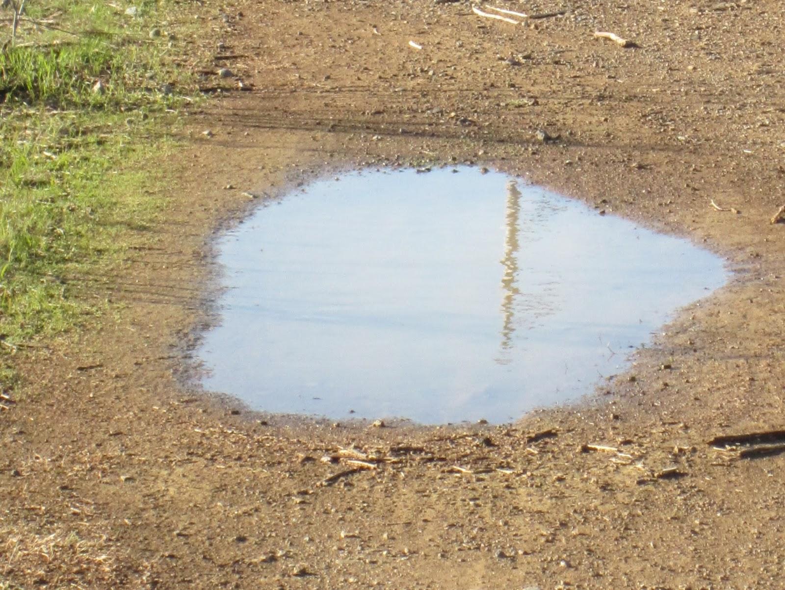Image - Marsh-puddle-2.jpg | Happy Tree Friends Fanon Wiki | FANDOM ...