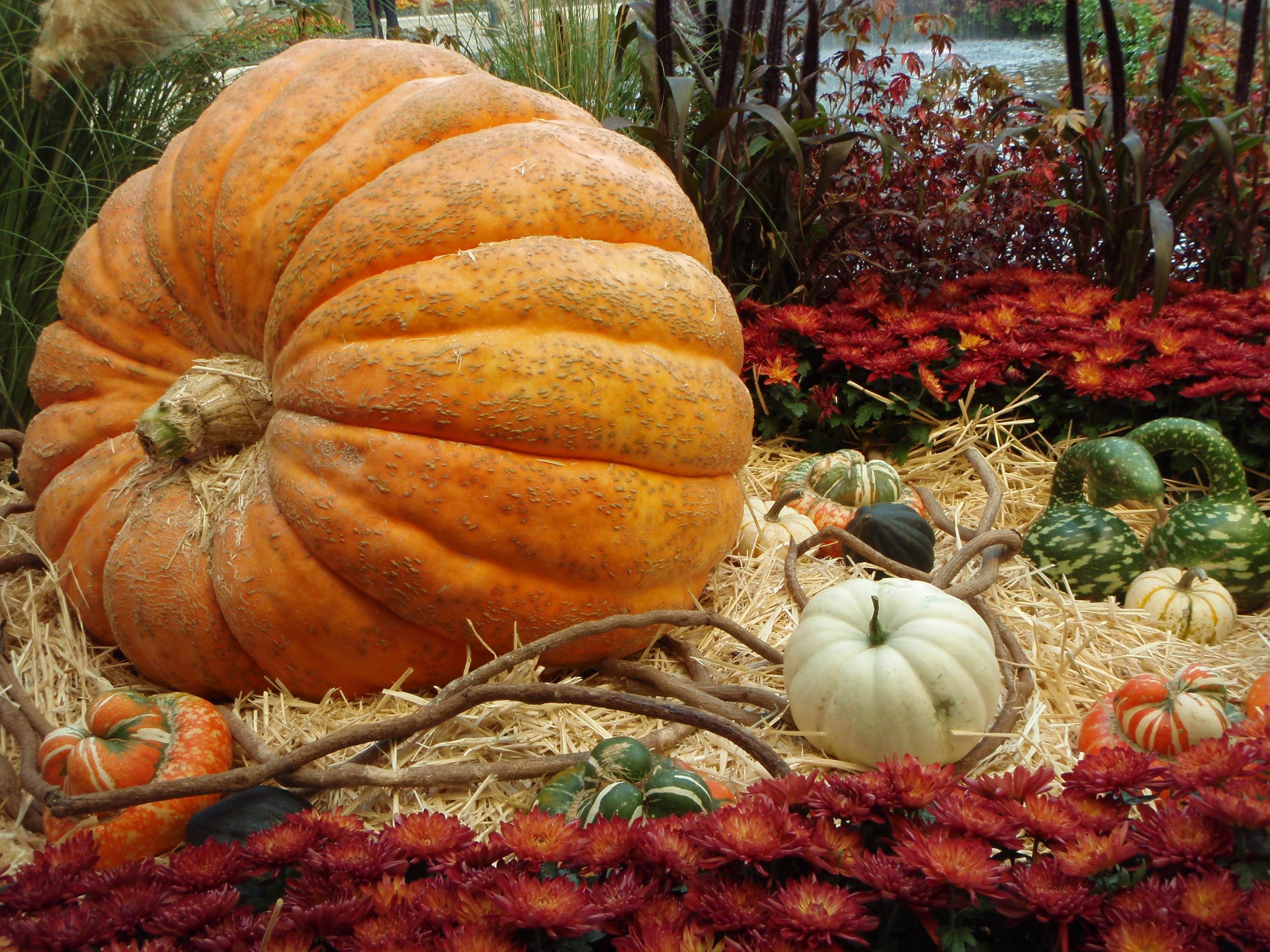 Pumpkin, California, Halloween, Usa, HQ Photo
