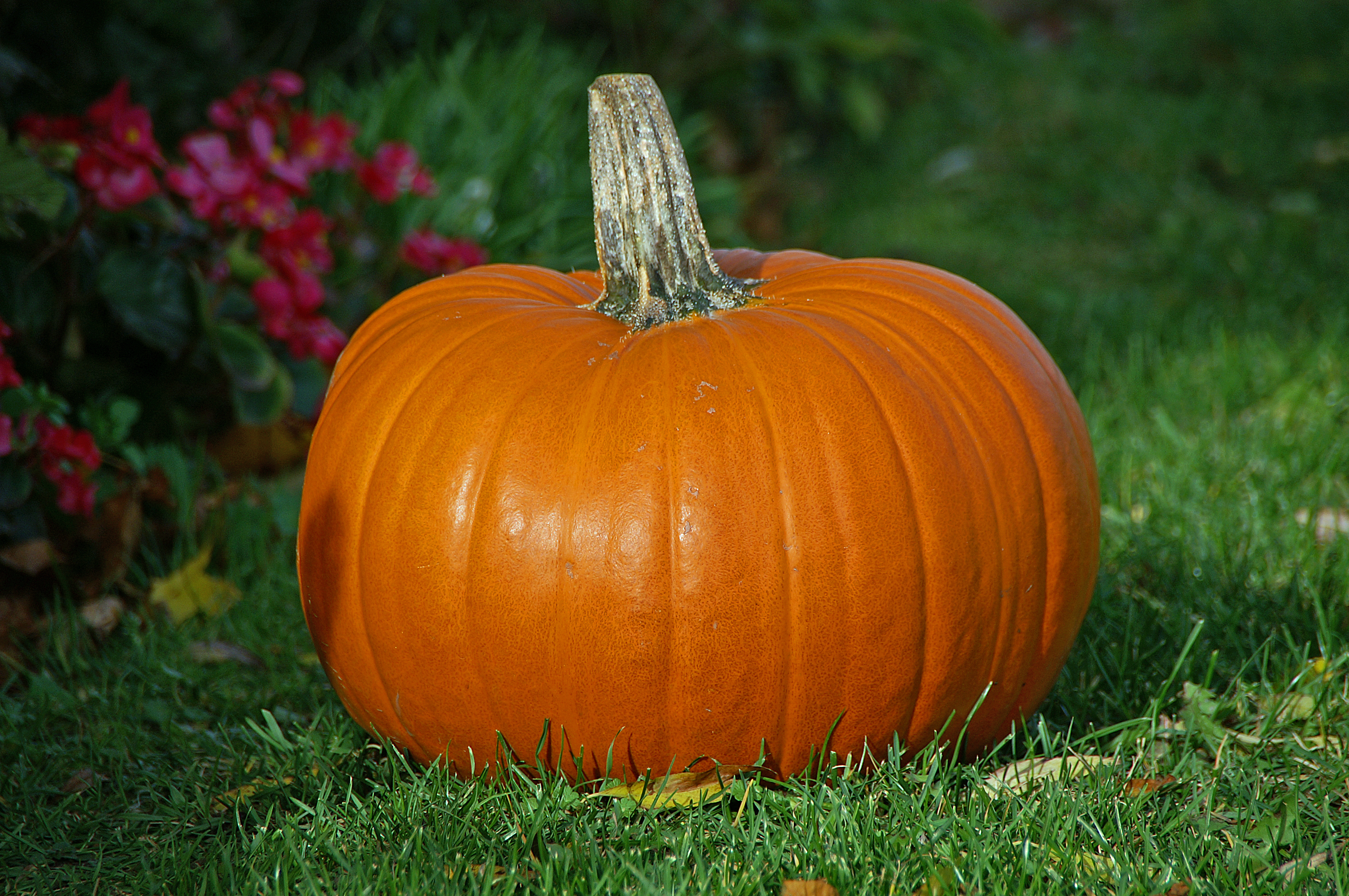 File:Pumpkin.jpg - Wikimedia Commons