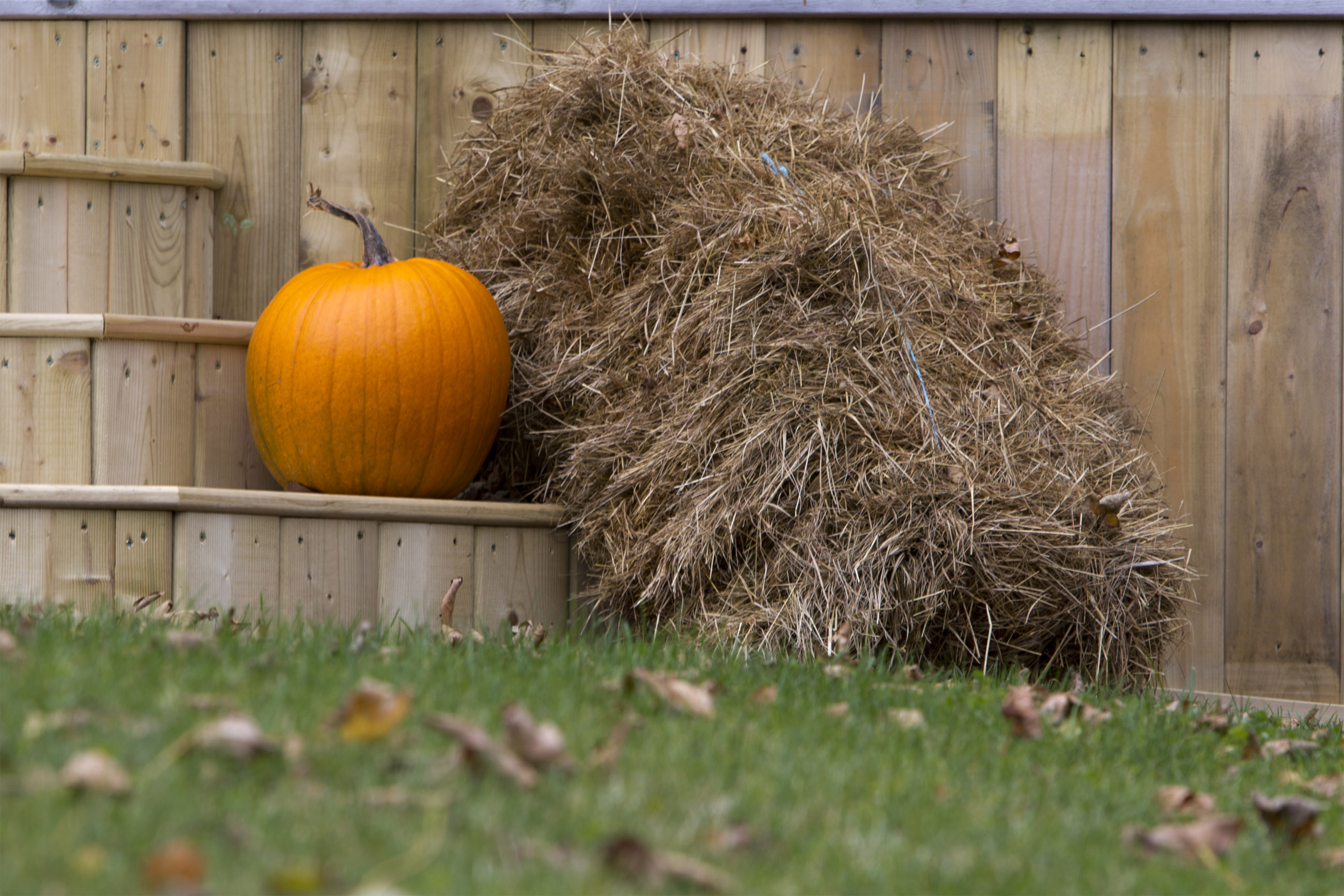 Pumpkin and Hay, Autumn, Decoration, Entrance, Front, HQ Photo