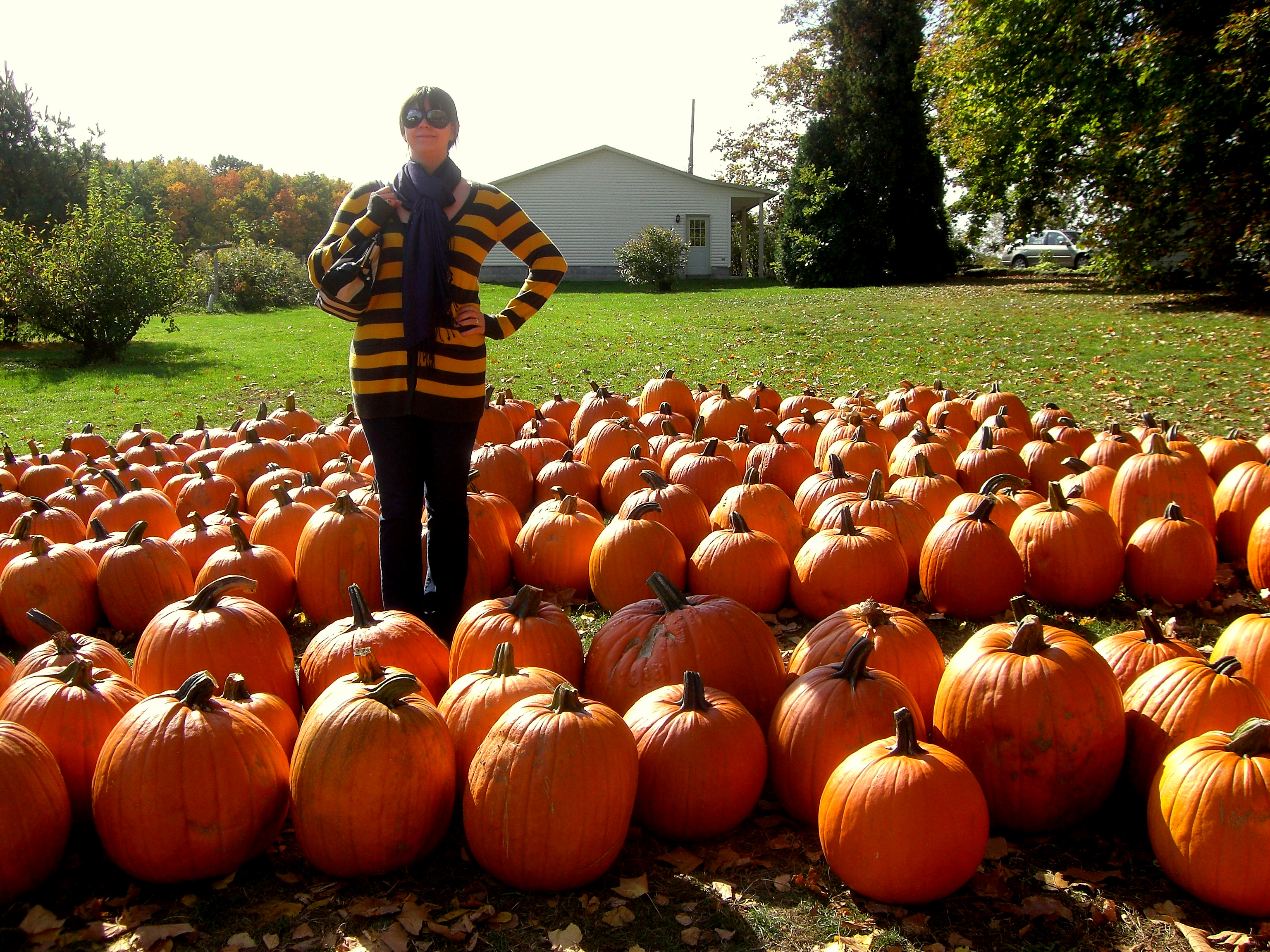 Pumpkin field photo