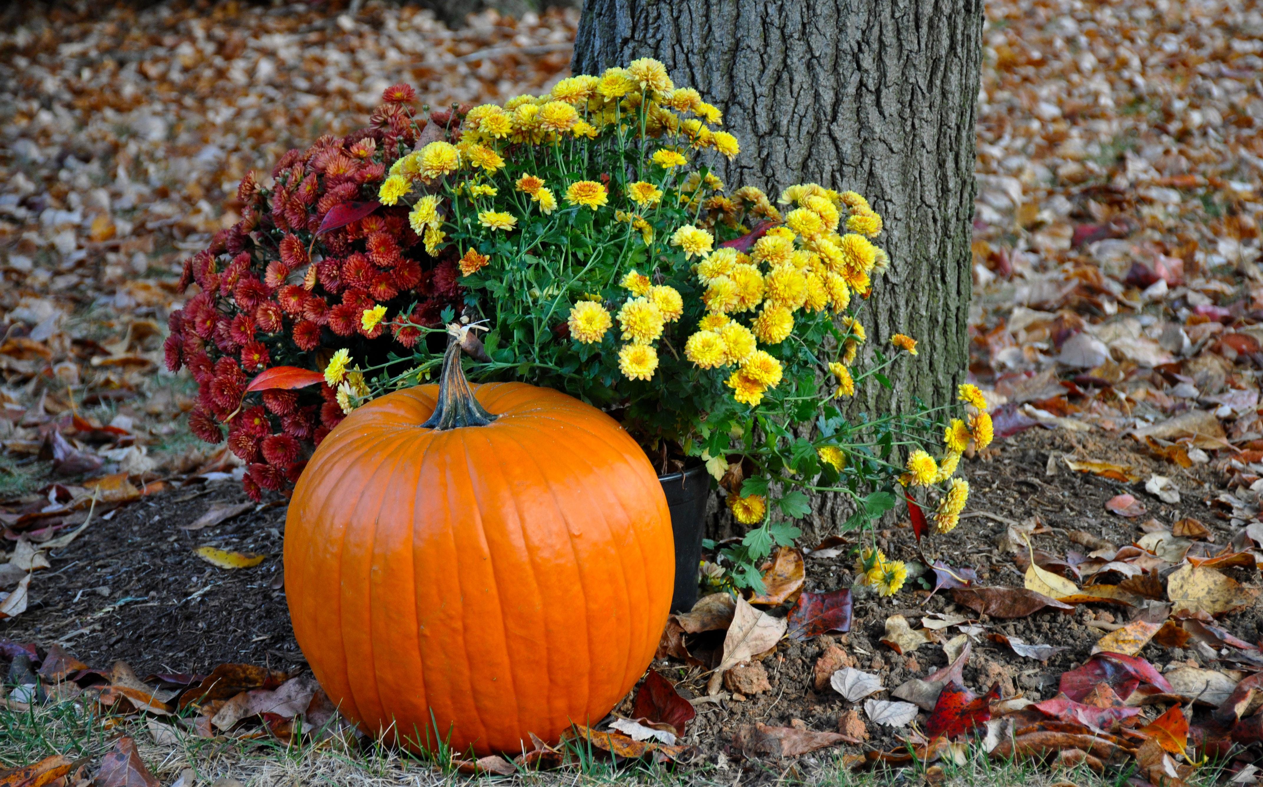 Pumpkin near tree photo
