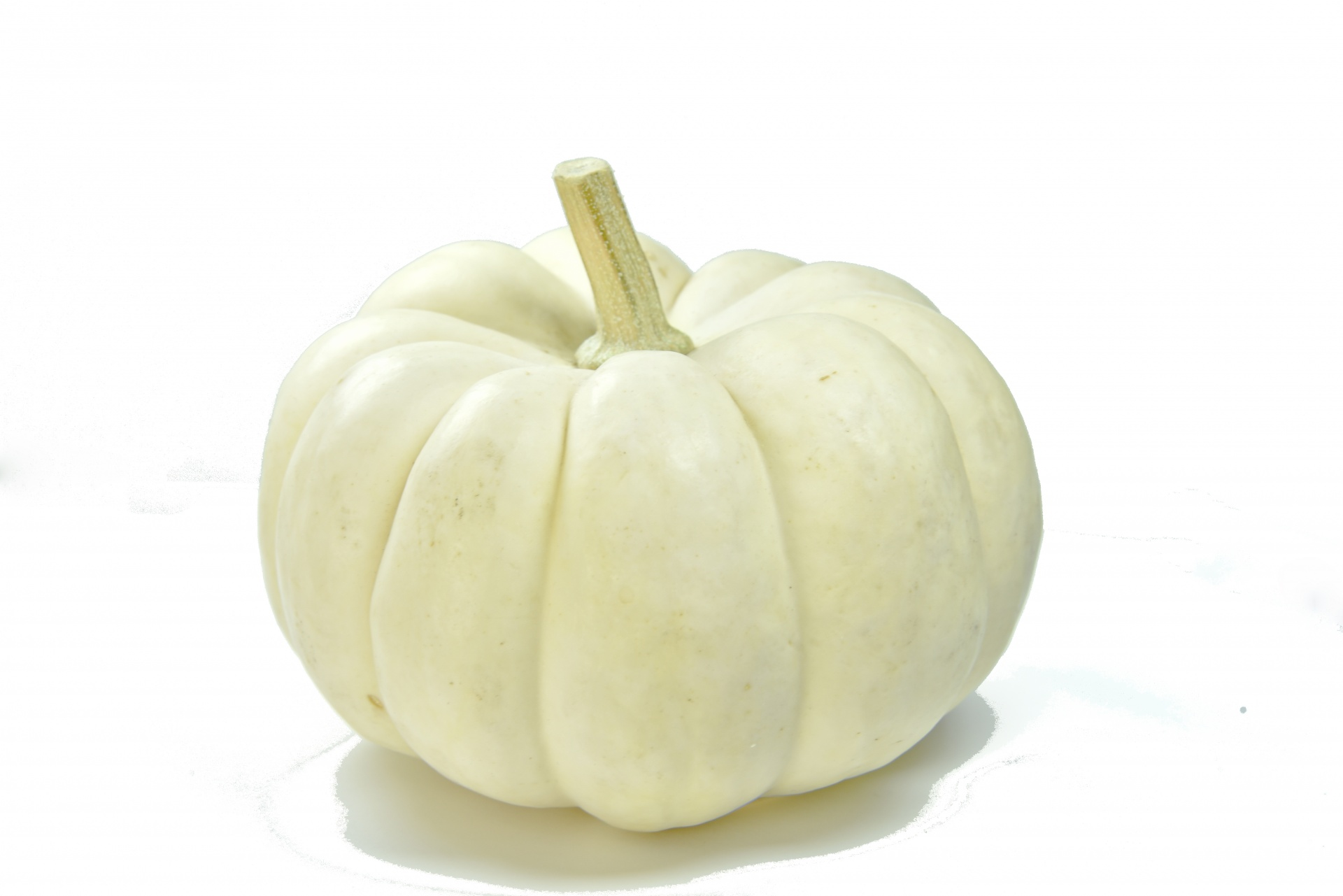 Pumpkin on white photo