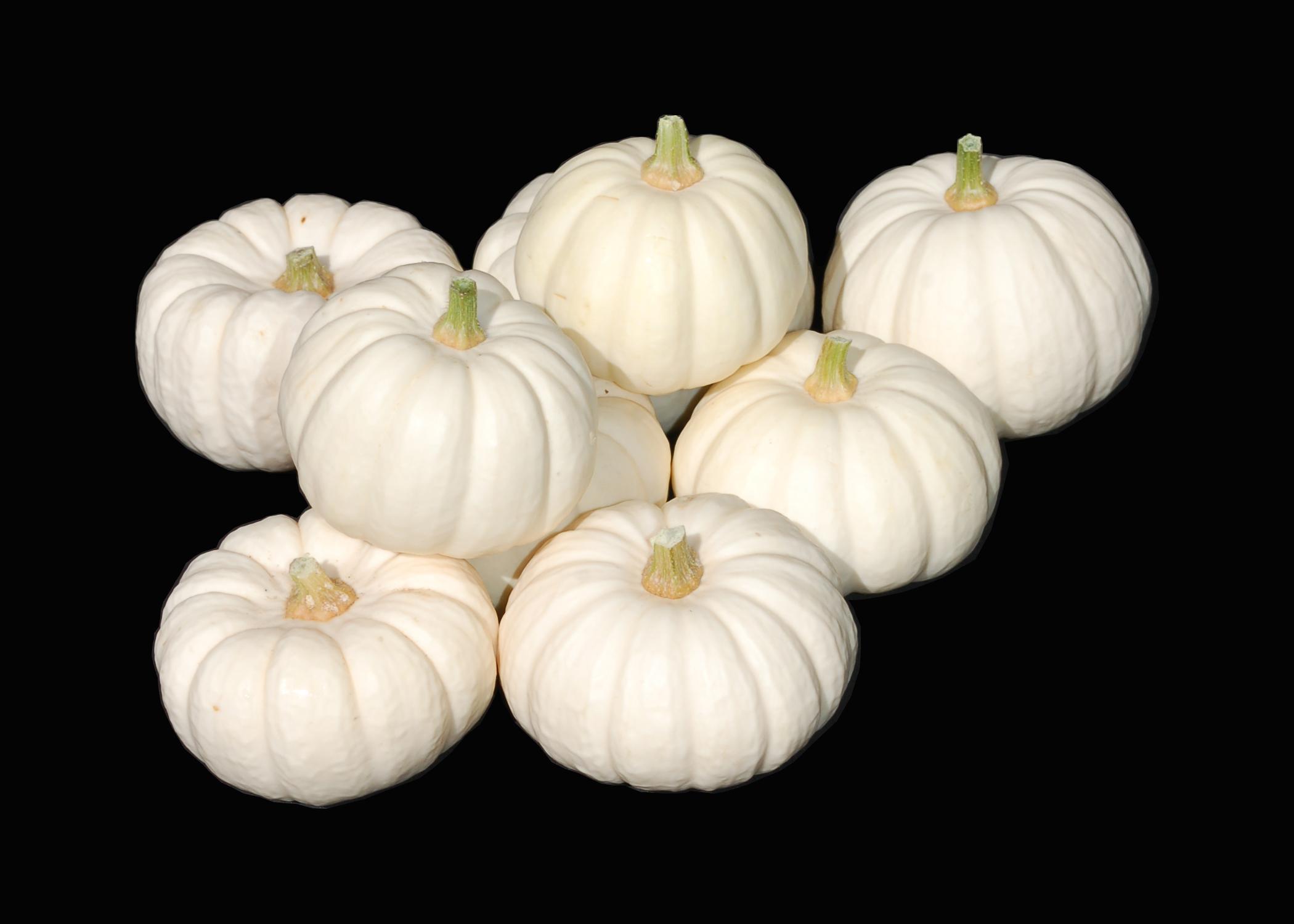 Baby Boo – Autumn Harvest Pumpkins