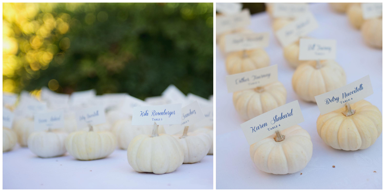 Pumpkin on white photo