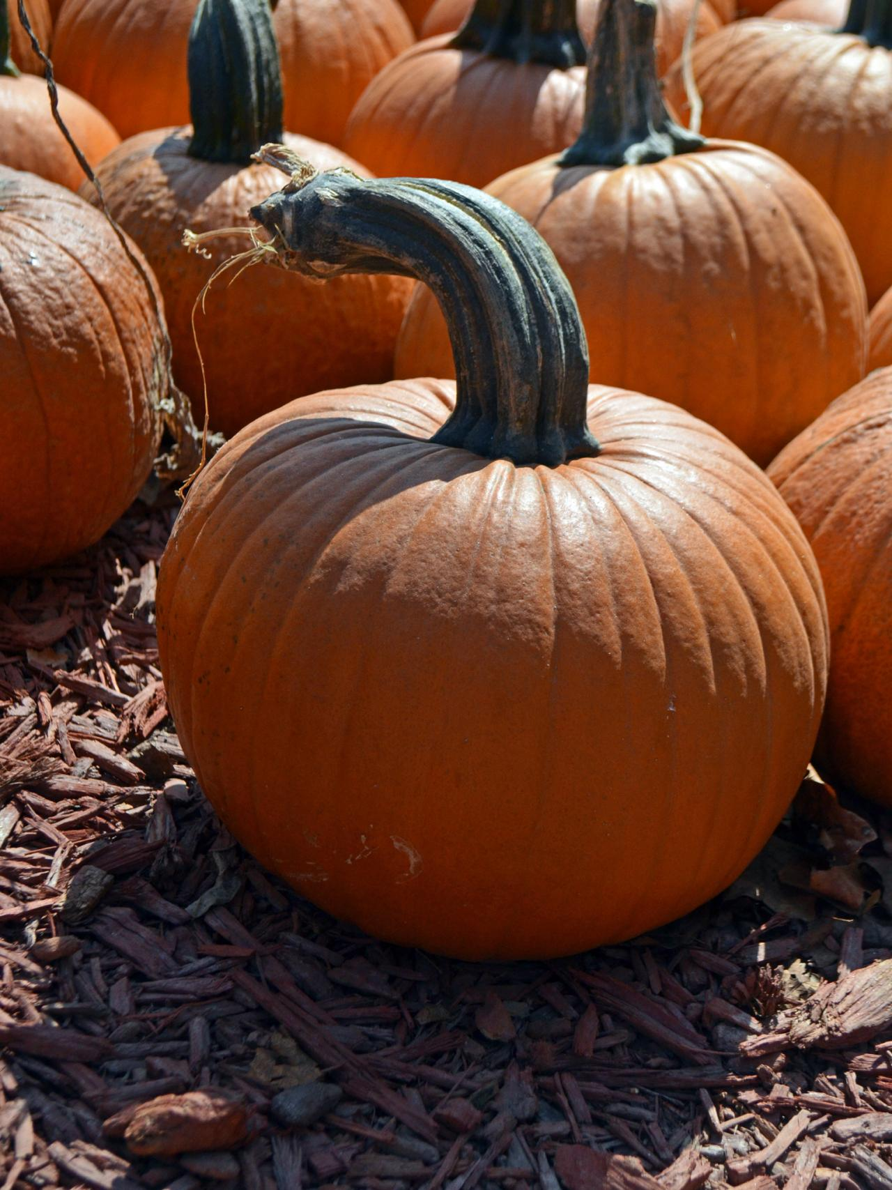Storing Pumpkins | HGTV
