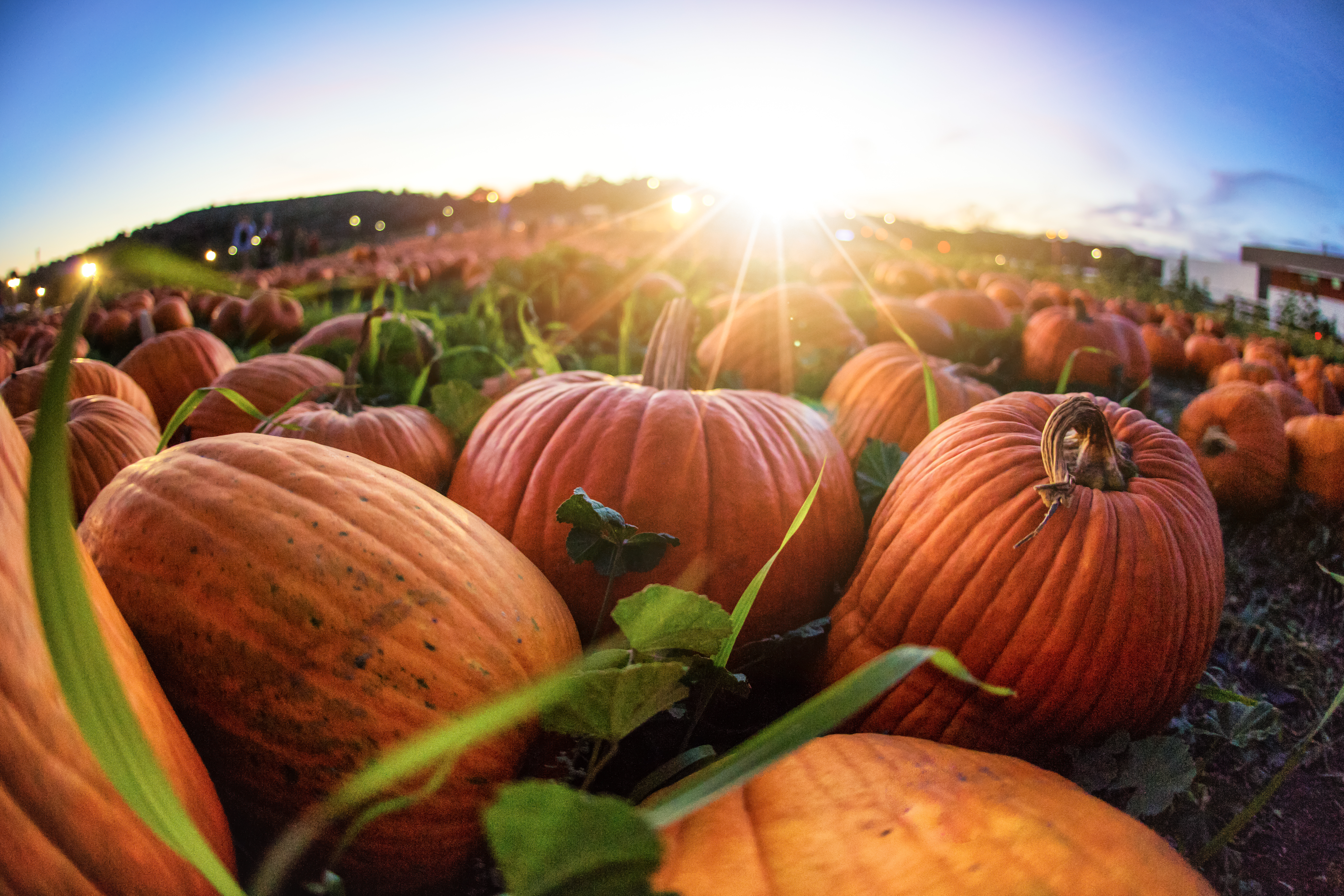 FreshPoint | So, is it really pumpkin you're buying in those cans?