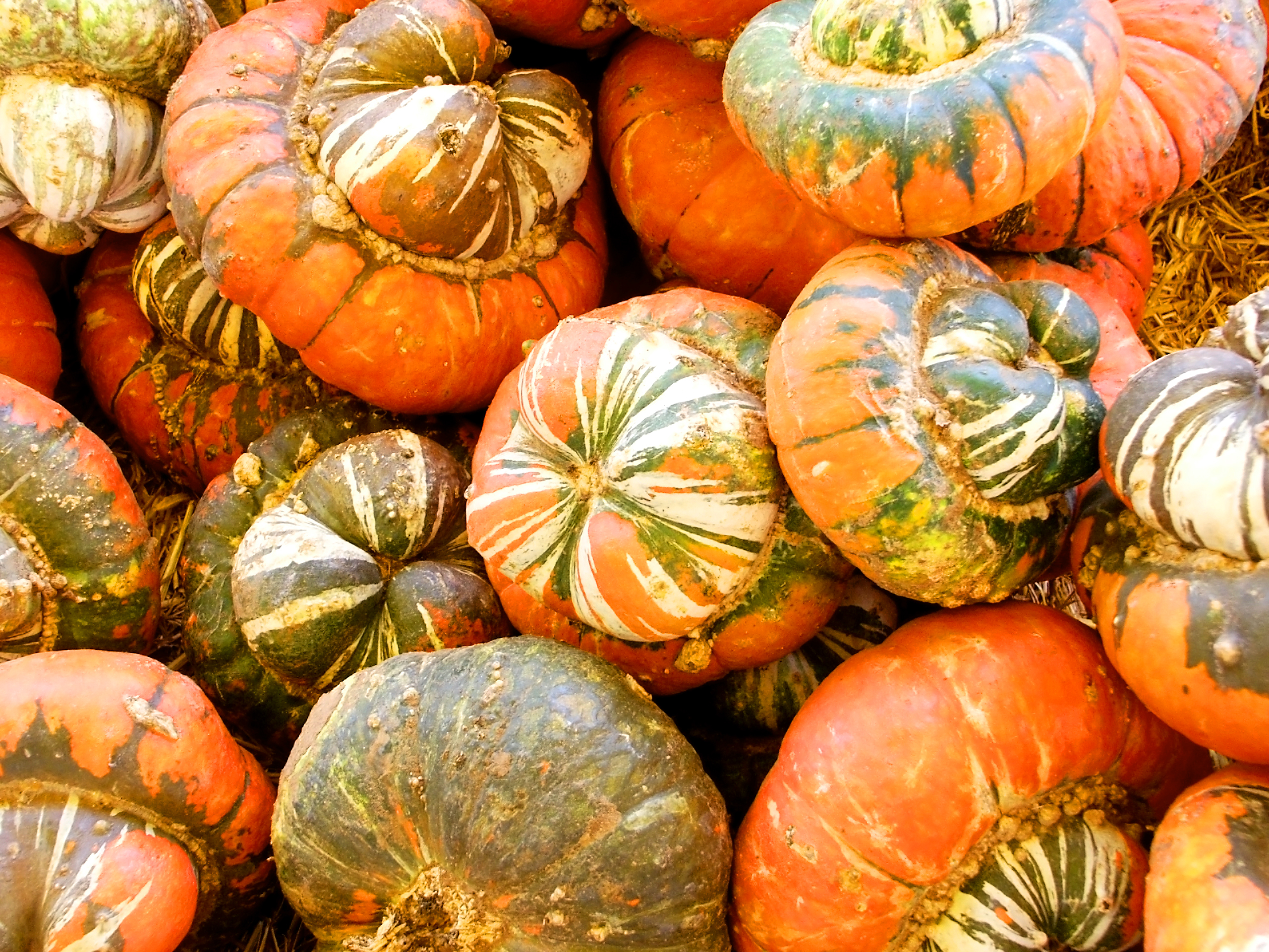 Pumpkins, Plant, Market, Mini, Miniature, HQ Photo