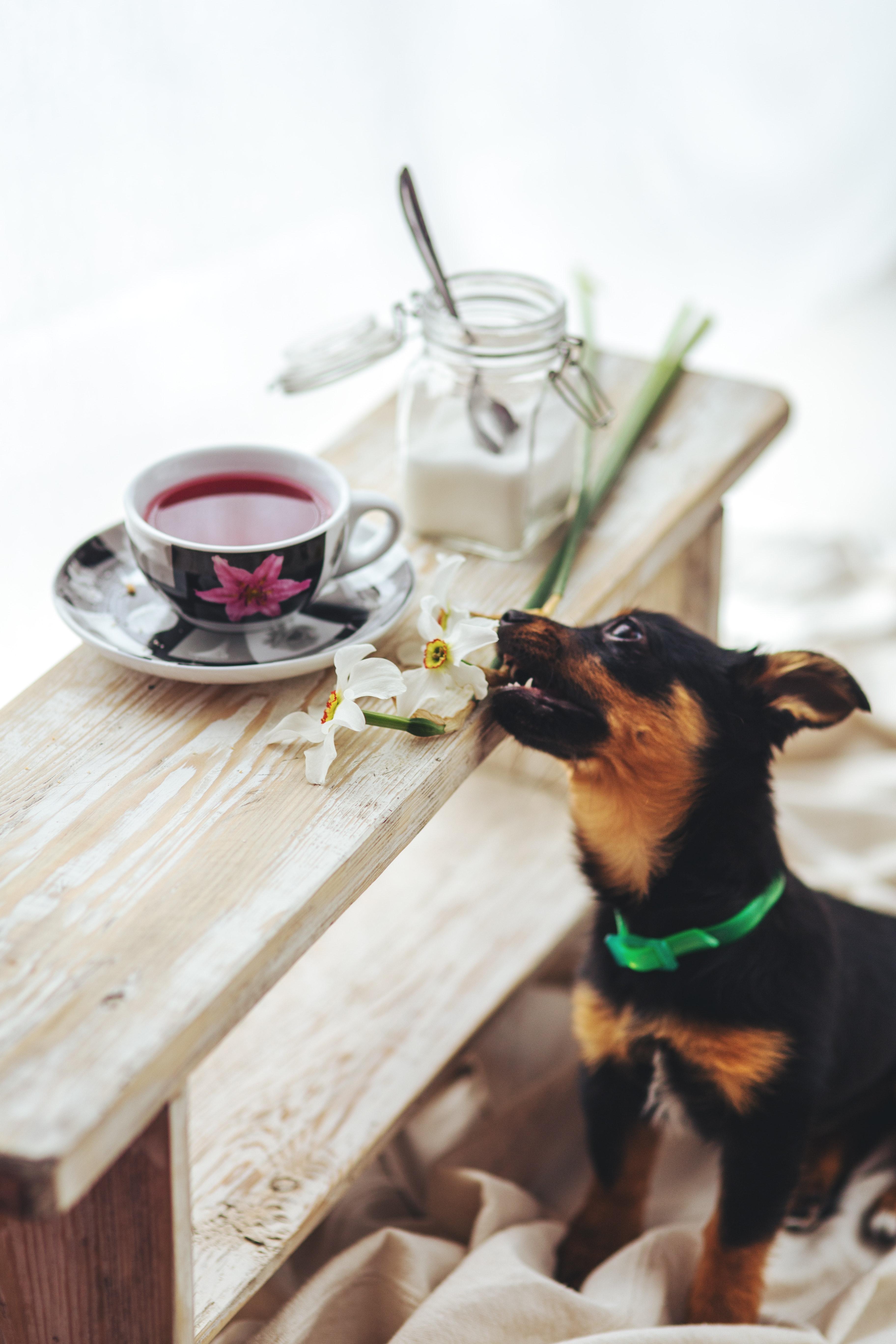 Puppy bites the flower photo