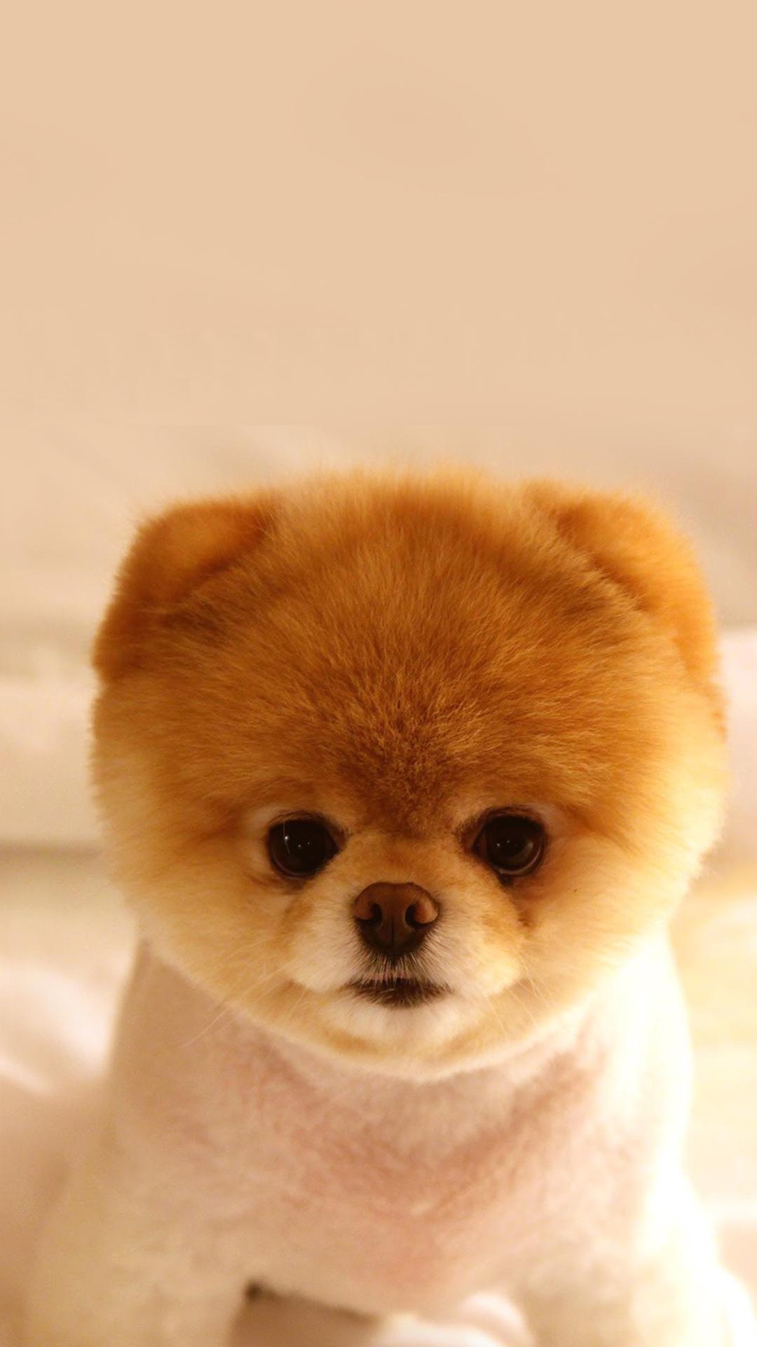 Free HD Cutest Puppy Dog Phone Wallpaper...4982