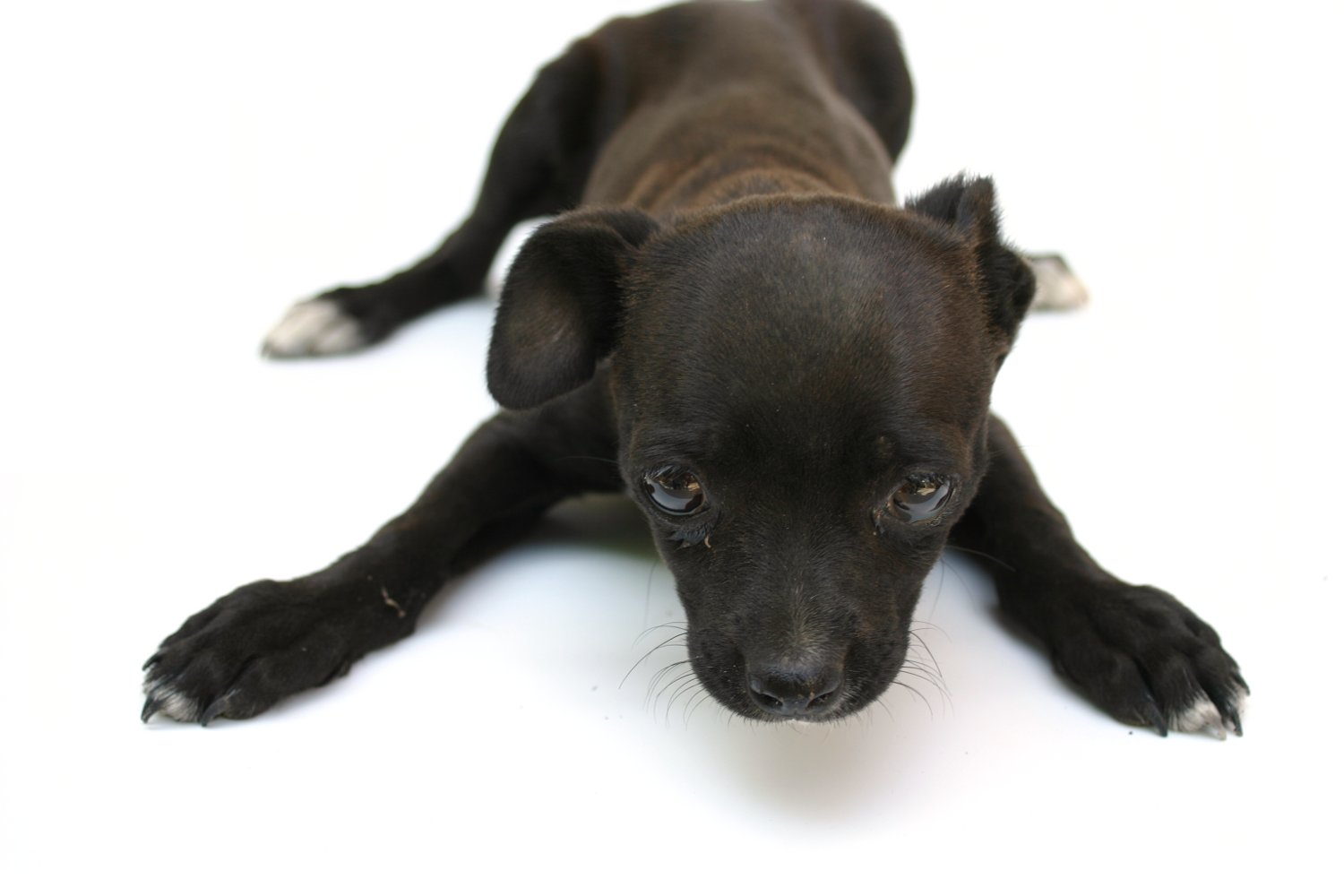 puppy dog, Animal, Photo, Little, Looking, HQ Photo