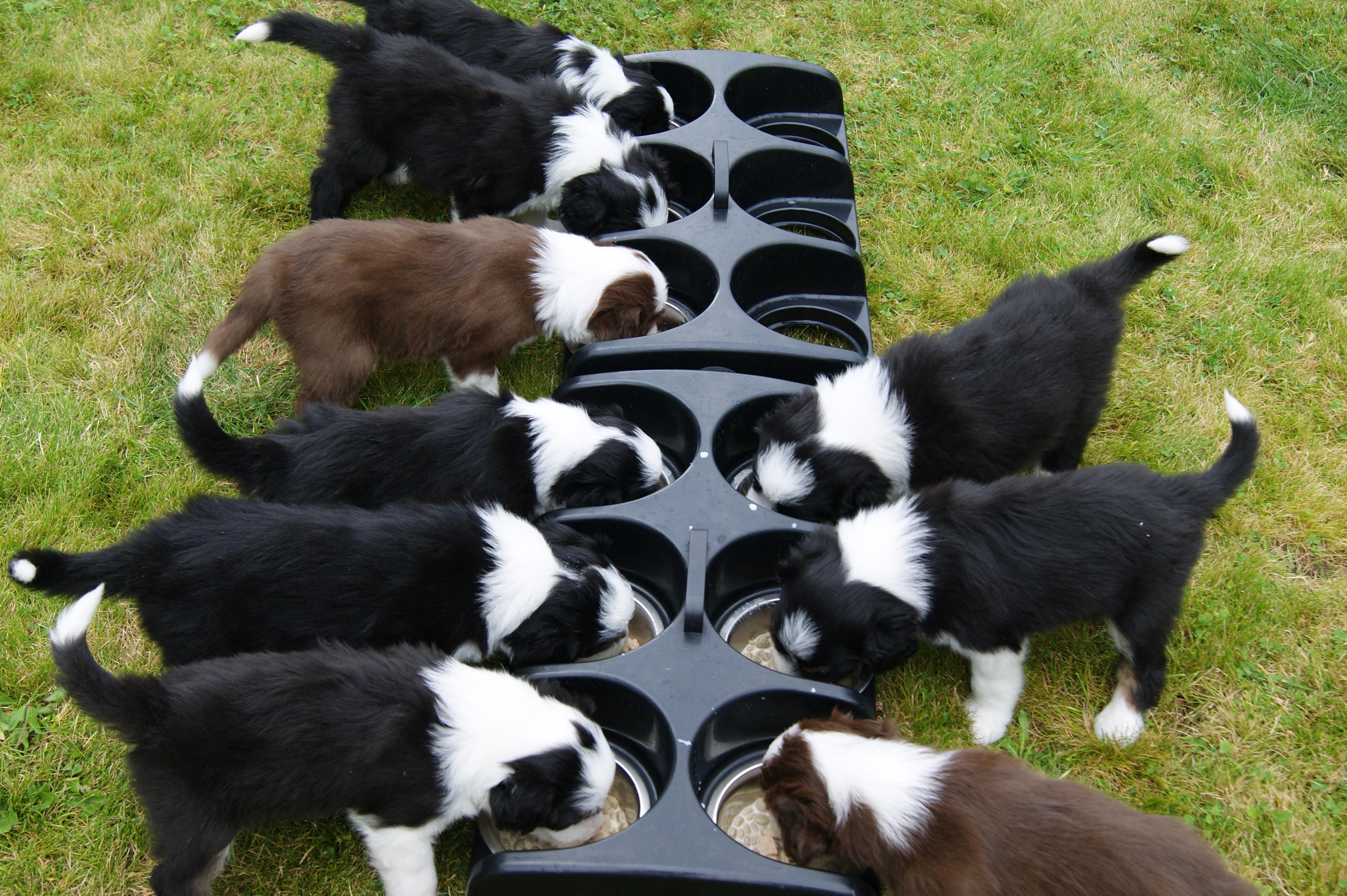 Dog Food Advice: Feeding Your Puppy or Dog