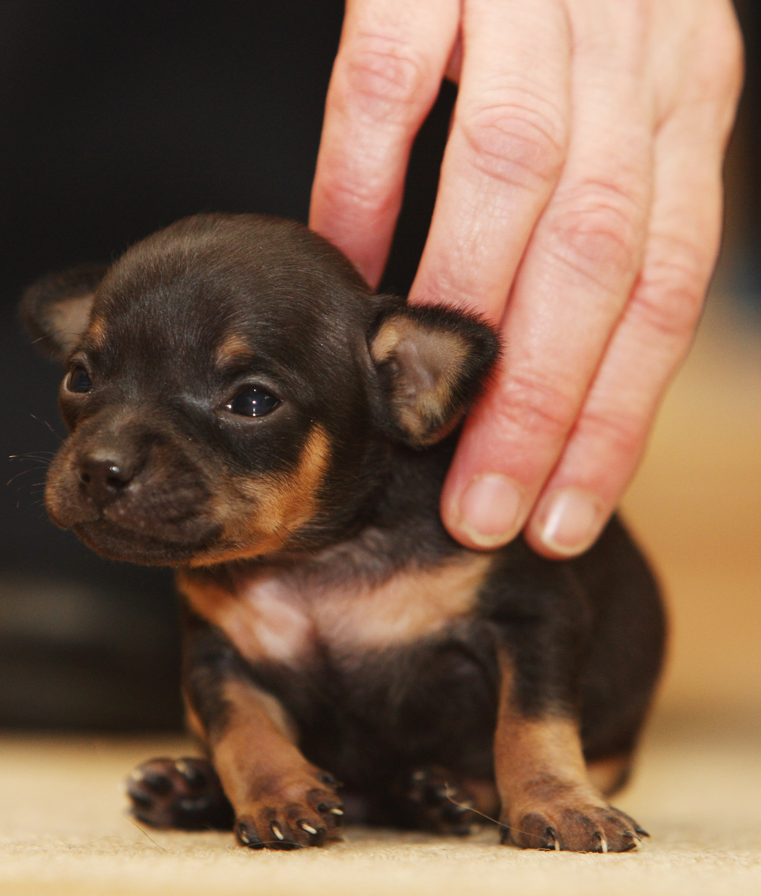 10 Things You Absolutely Must Know Before Getting A Puppy