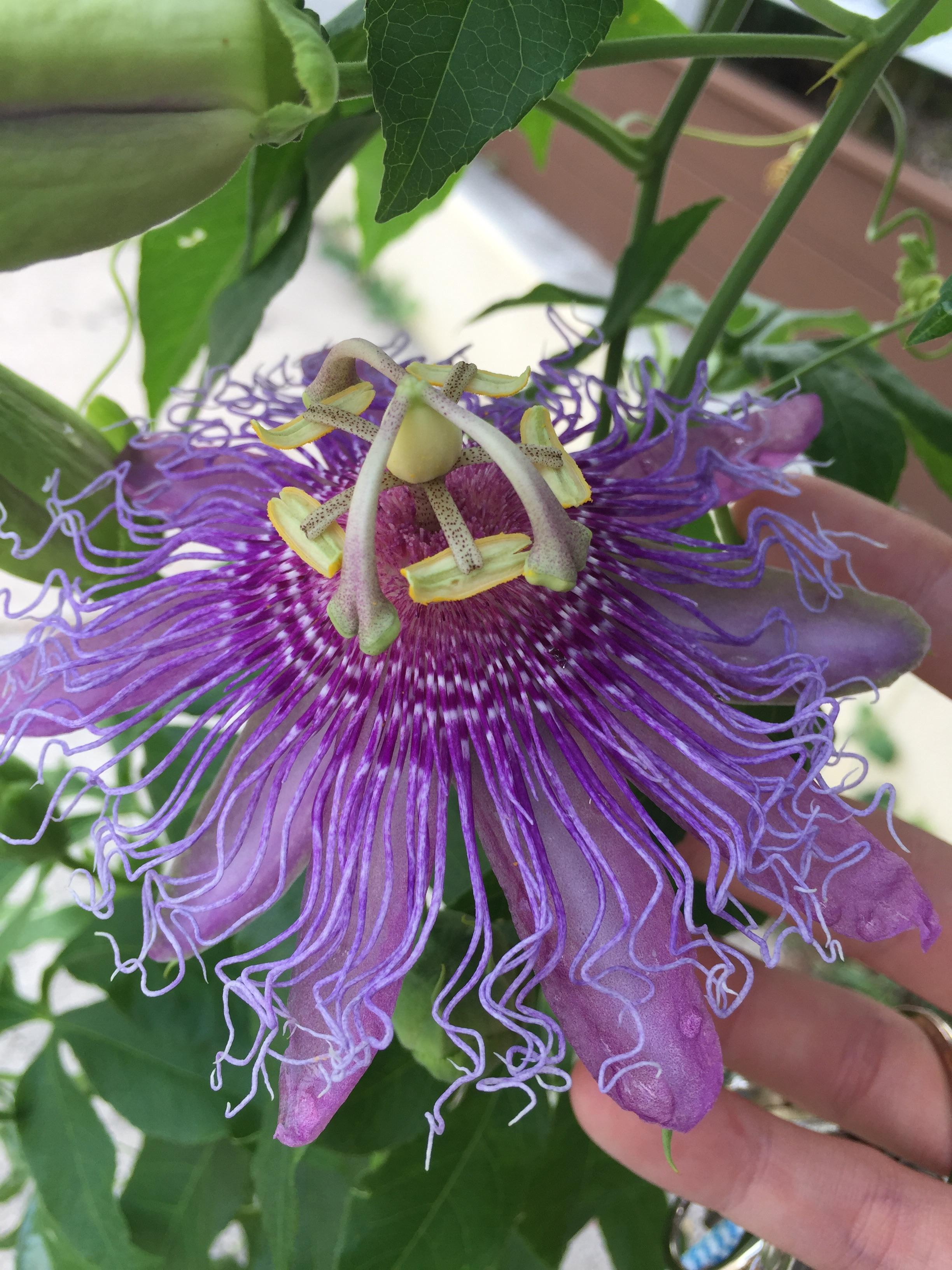 Any idea what kind of alien flower this is? : botany