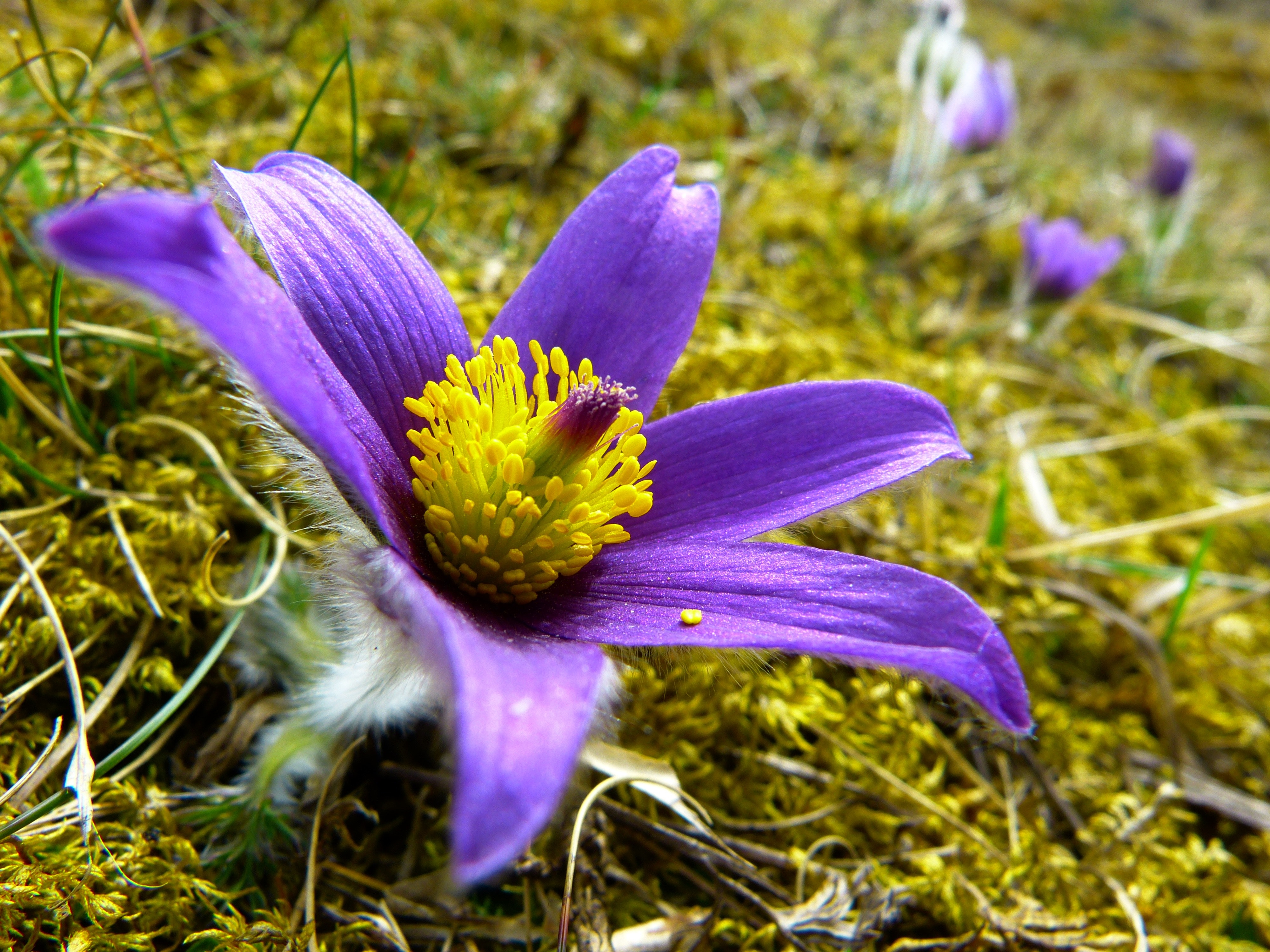 Purple and Yellow Flower, Bloom, Blossom, Blur, Flora, HQ Photo