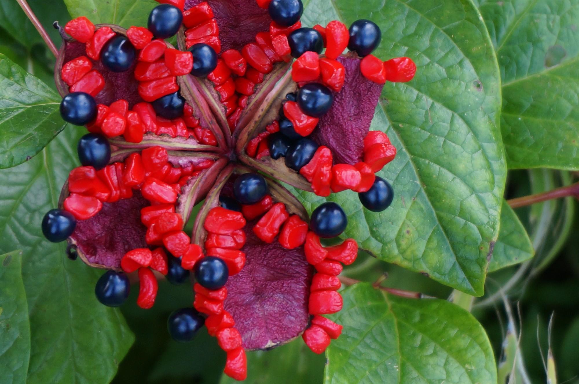Purple berries photo