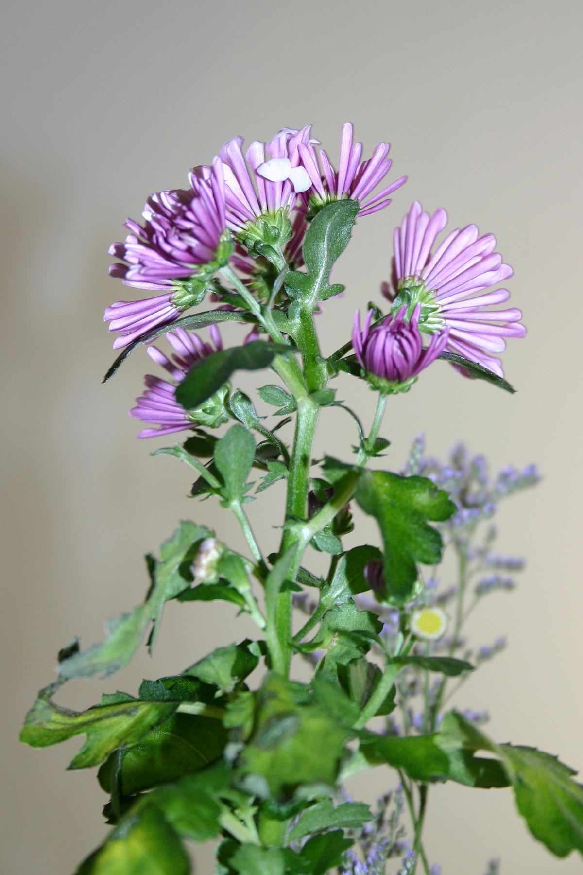 Free Photo Purple Flower Purple Plant Green Free Download