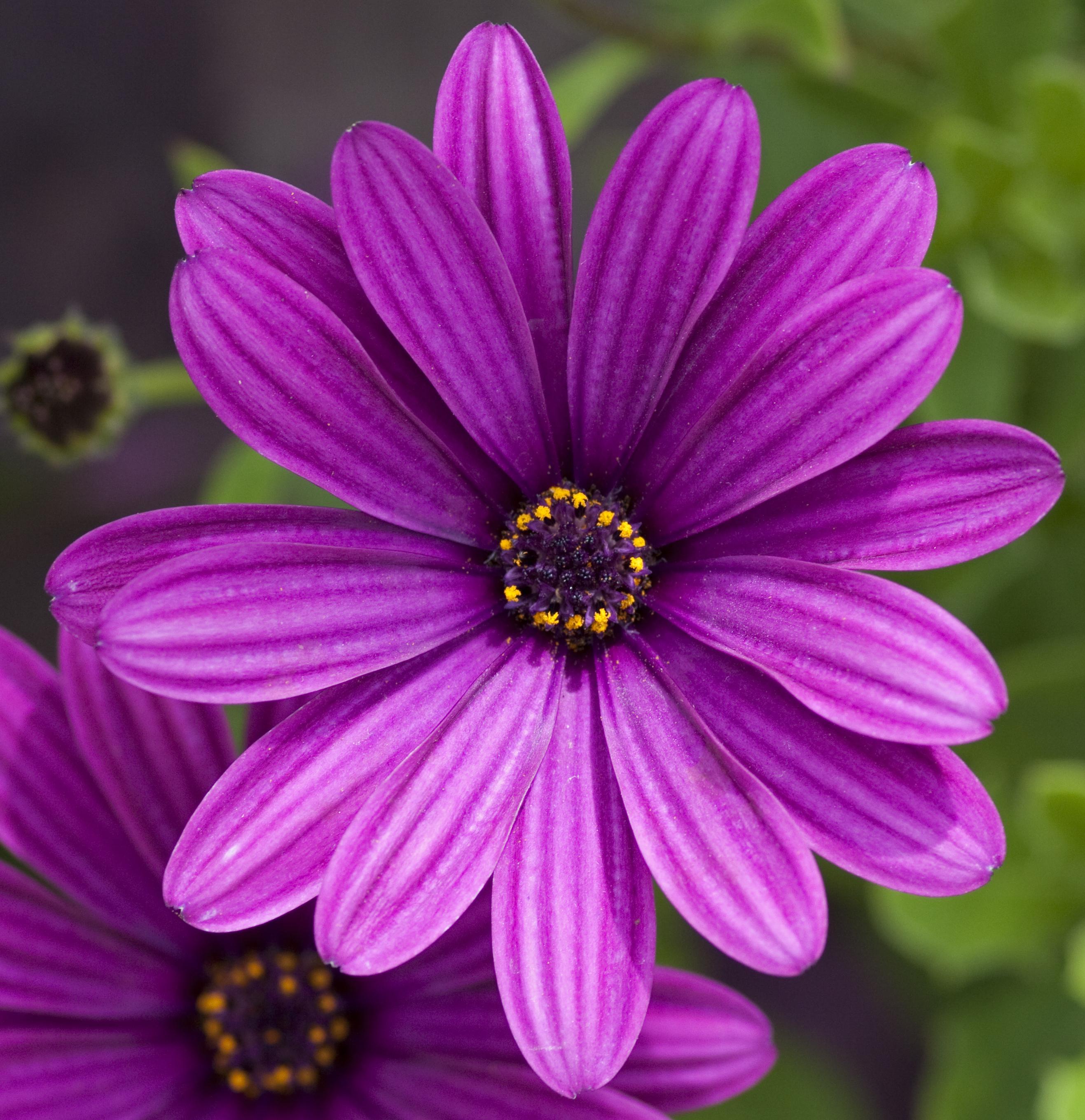 File:Purple flower (4764445139).jpg - Wikimedia Commons